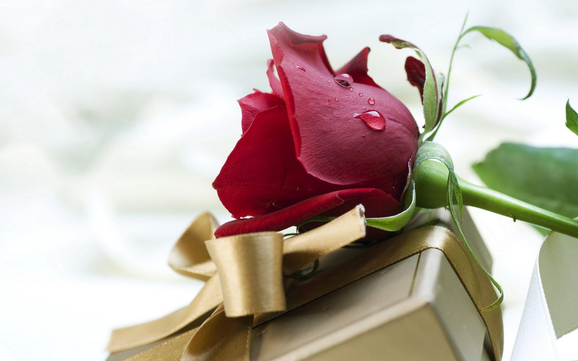 Открытки для мужчин цветы 81