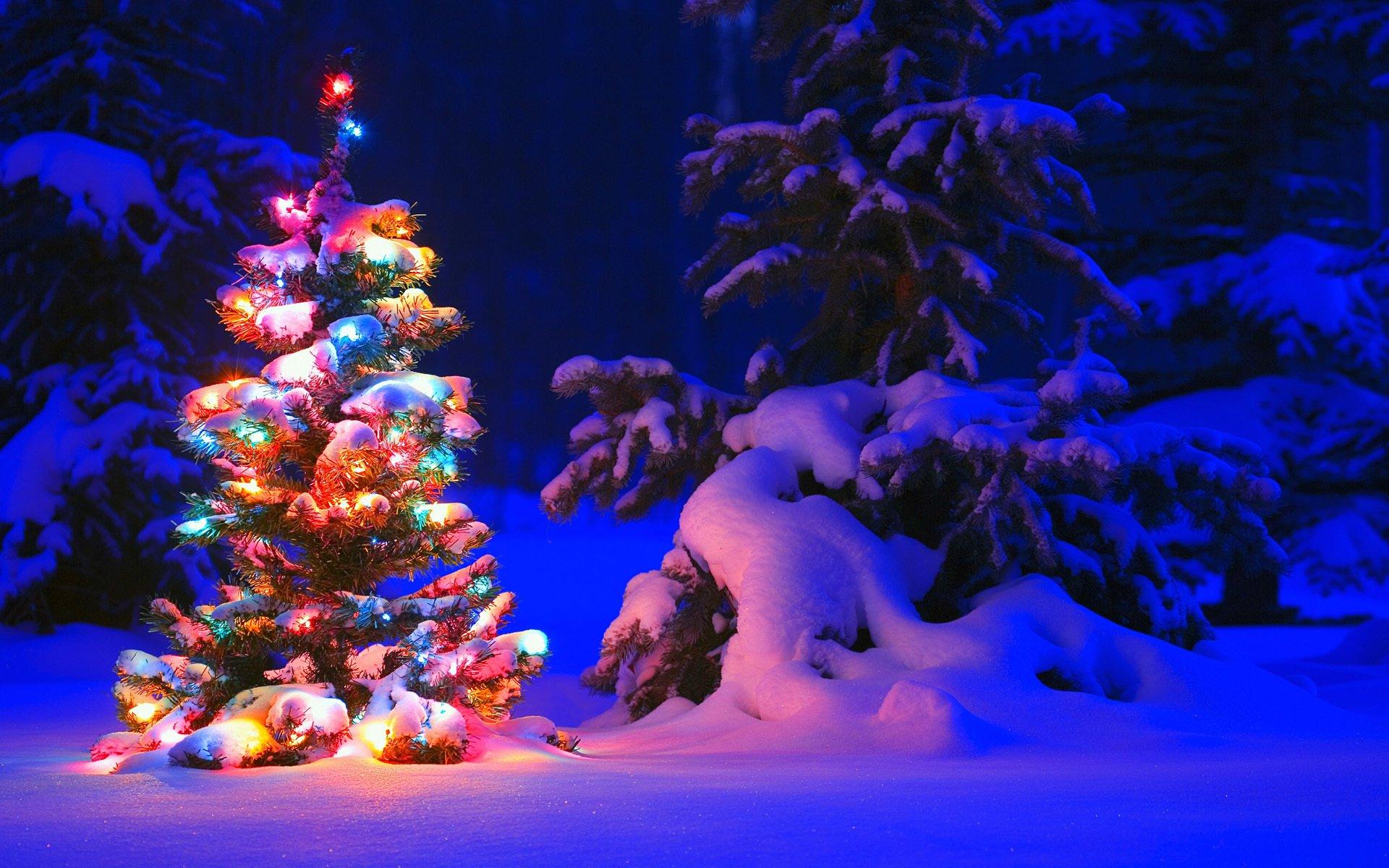 ель огни снег  № 3330316 бесплатно