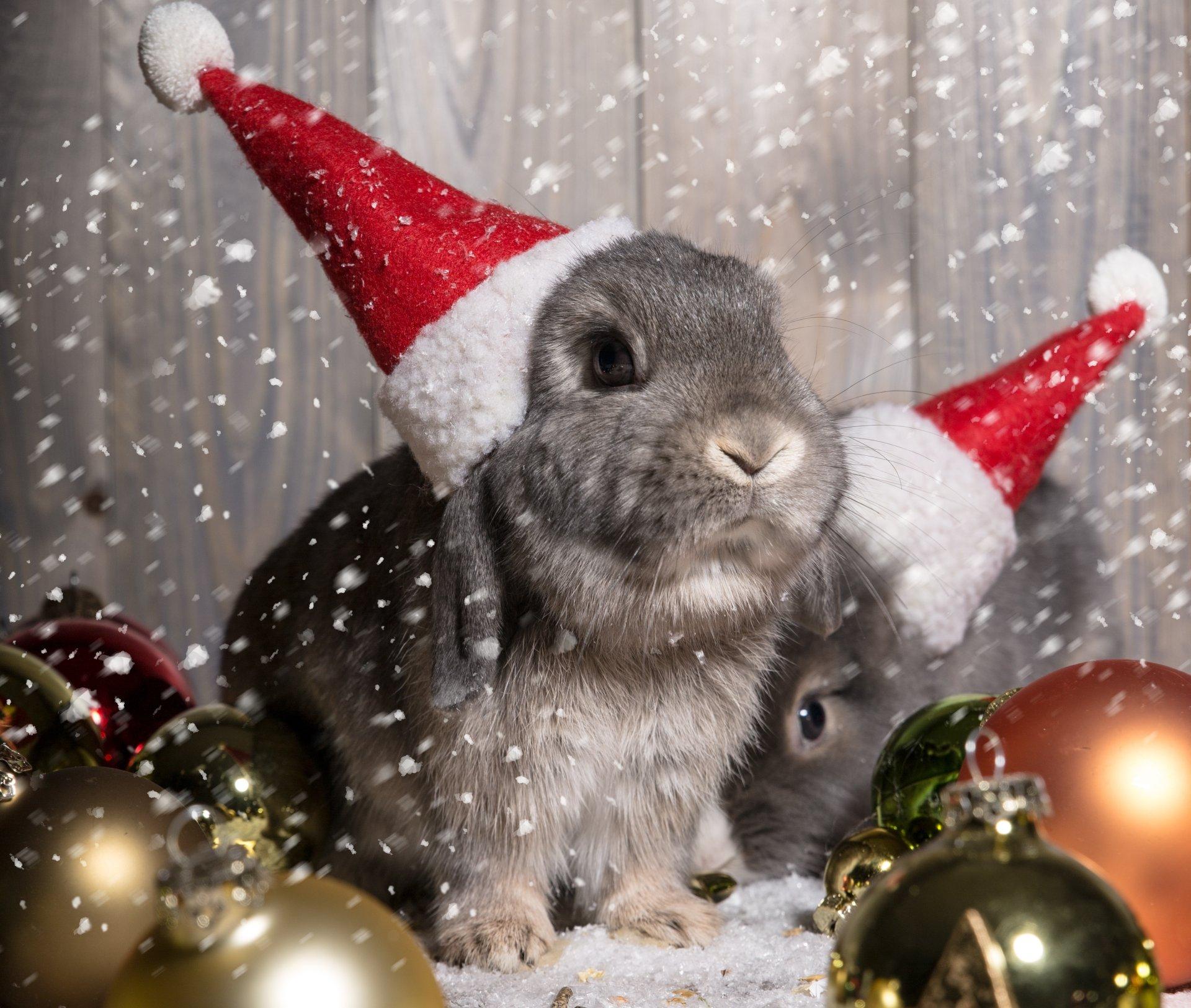 Новый год кролик поздравления