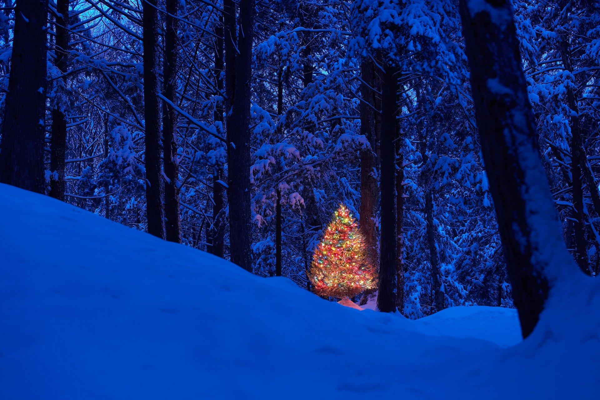 него, человек картинки новогоднего леса симптом может быть