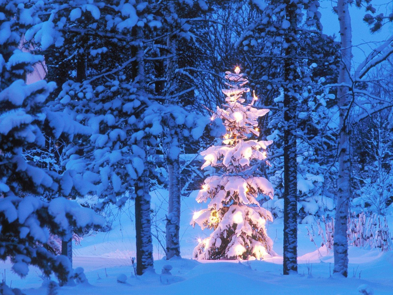 спб открытки зимний лес с новым годом можете также