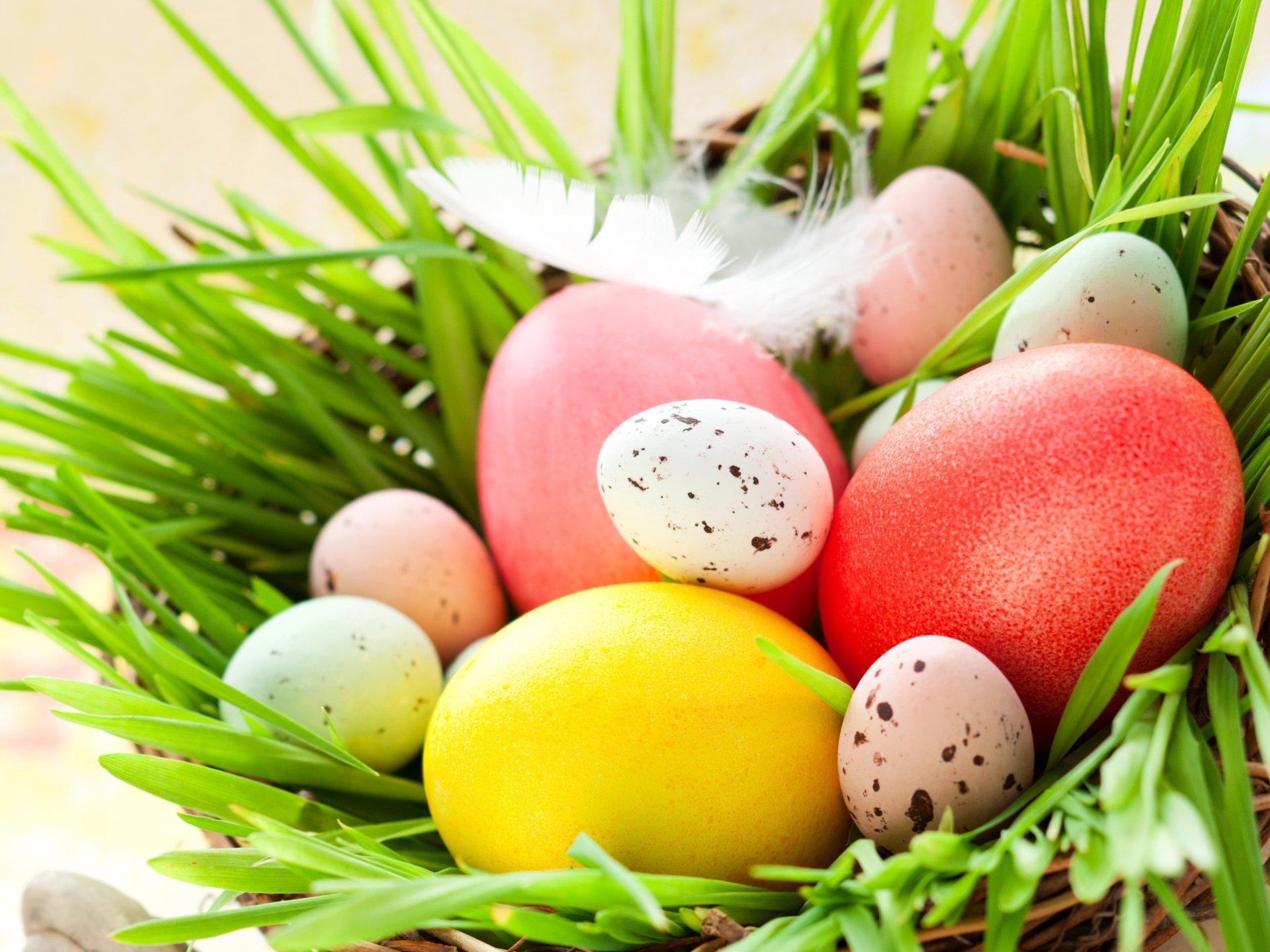 Обои перья, яйца. Праздники foto 14