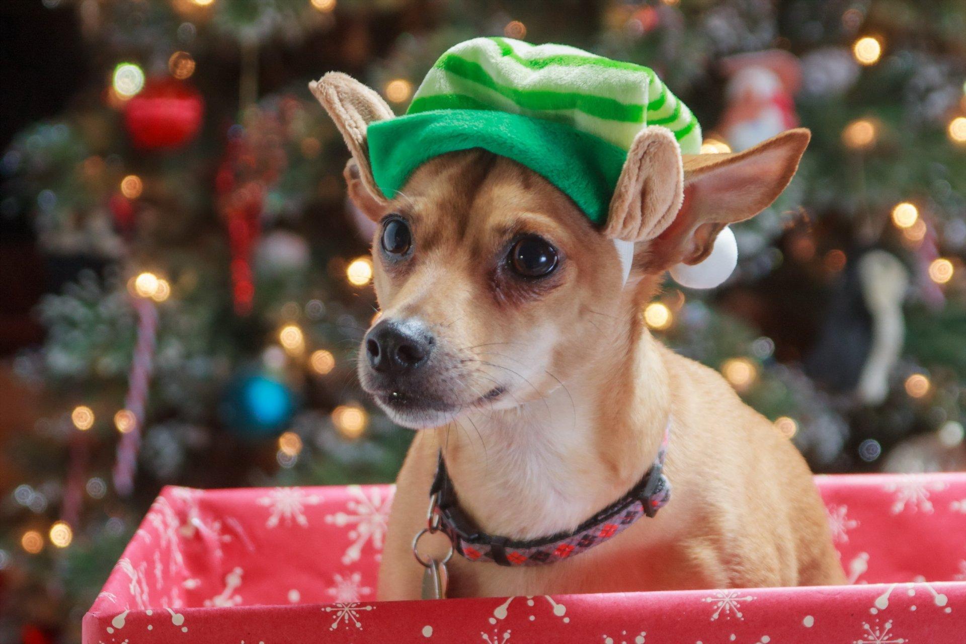 Новогодние картинки с собаками, днем рождения