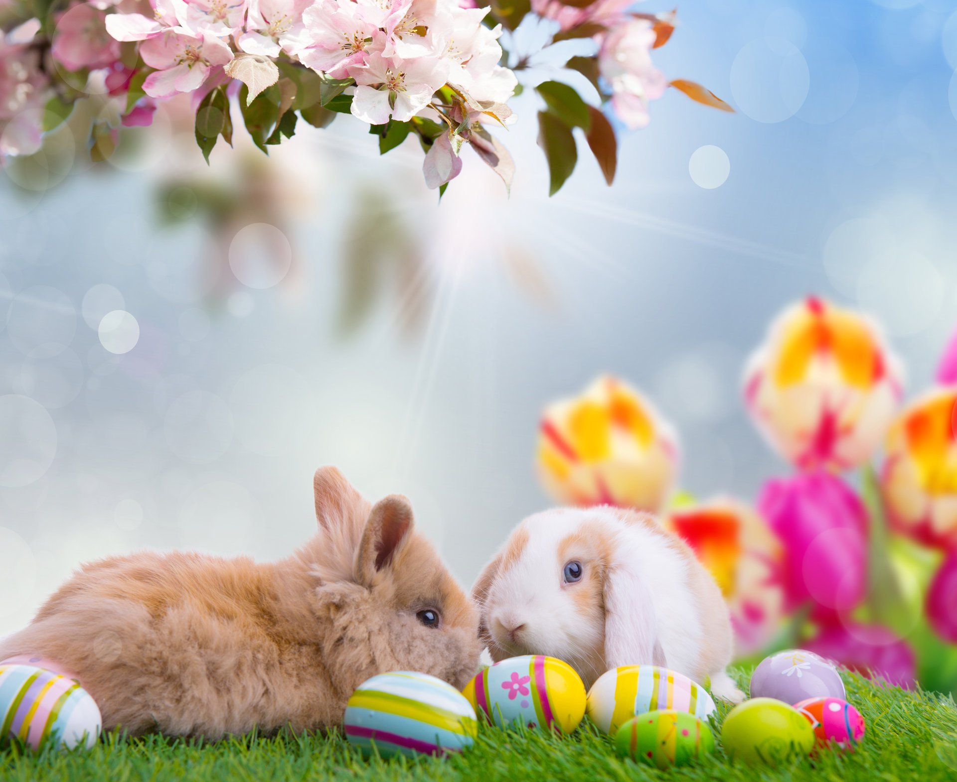 Картинки с животными природой и цветами