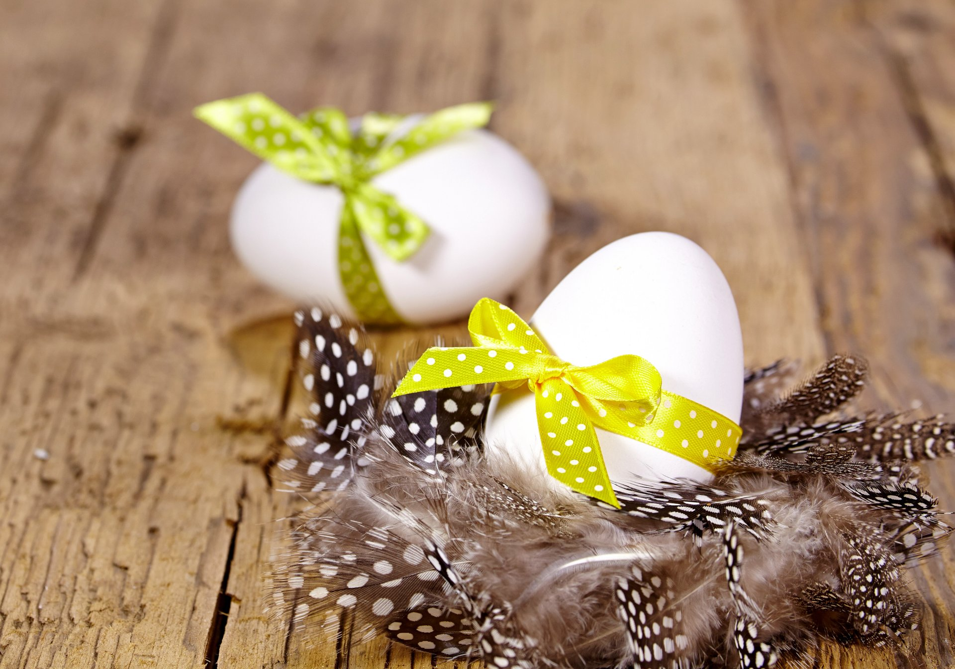 Обои перо, яйца. Разное foto 15