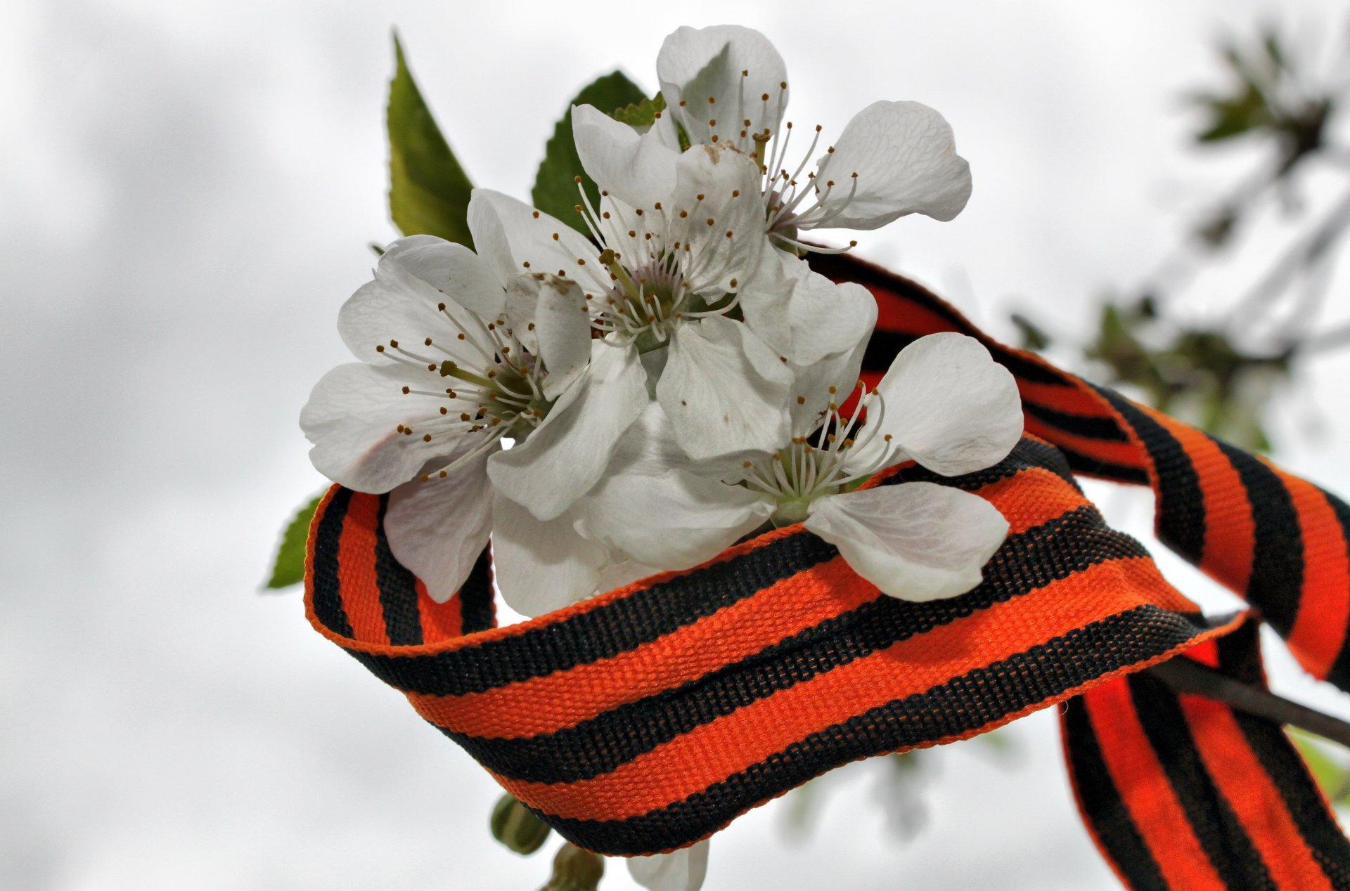 Георгиевская ленточка с цветком