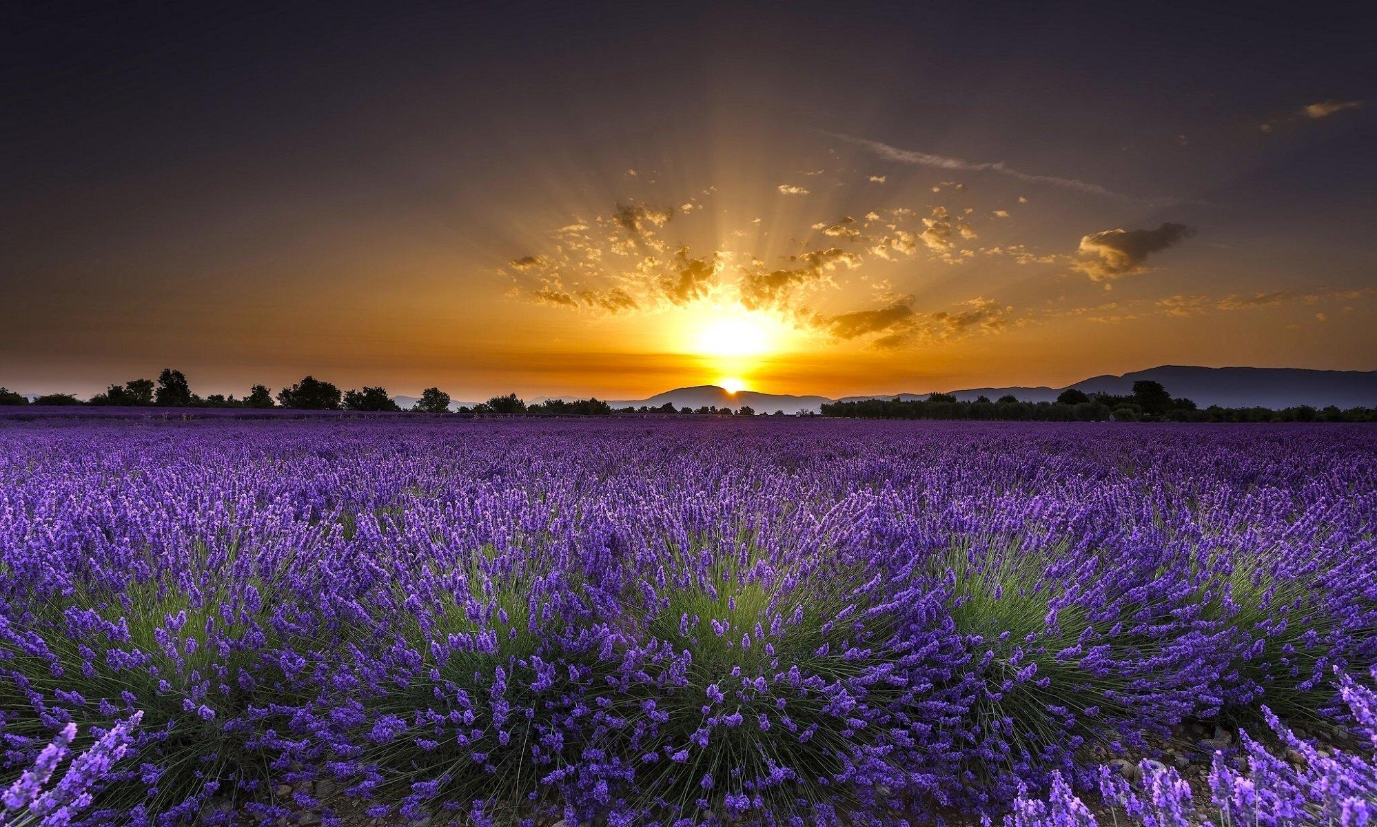 поле цветы рассвет field flowers dawn  № 3837051 без смс