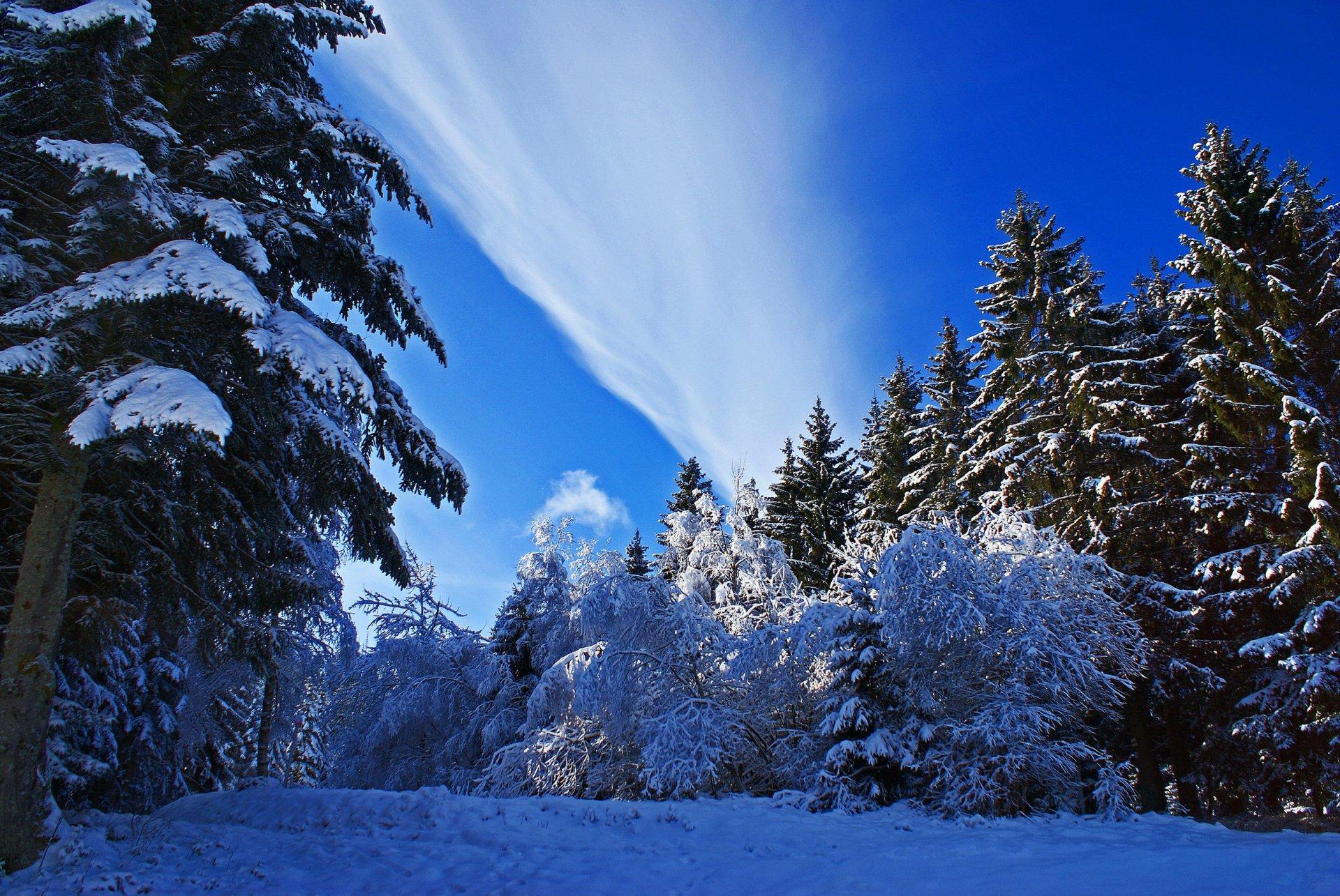 это одно природа зима картинки фото худеющих способны