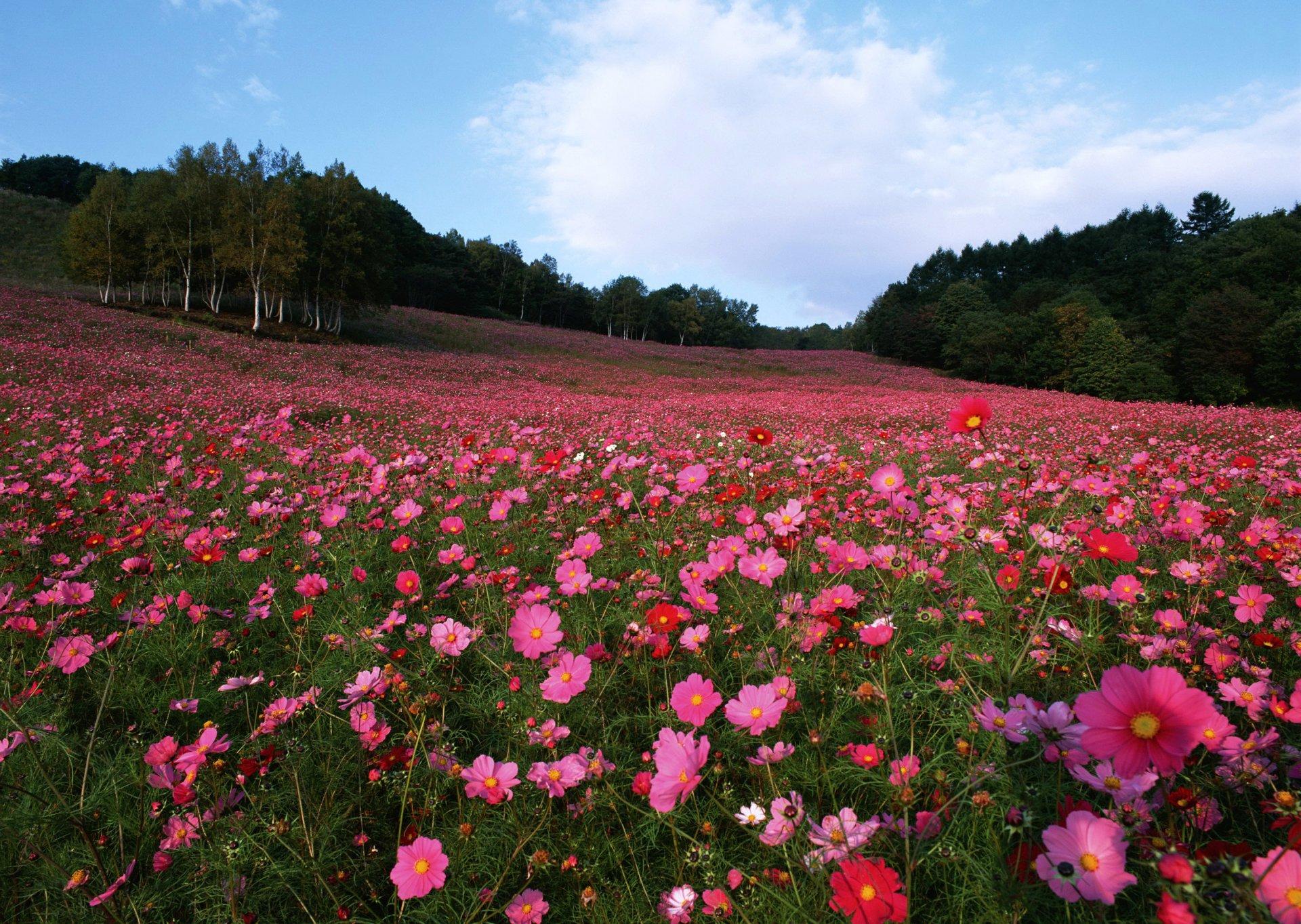 Фото цветов россии