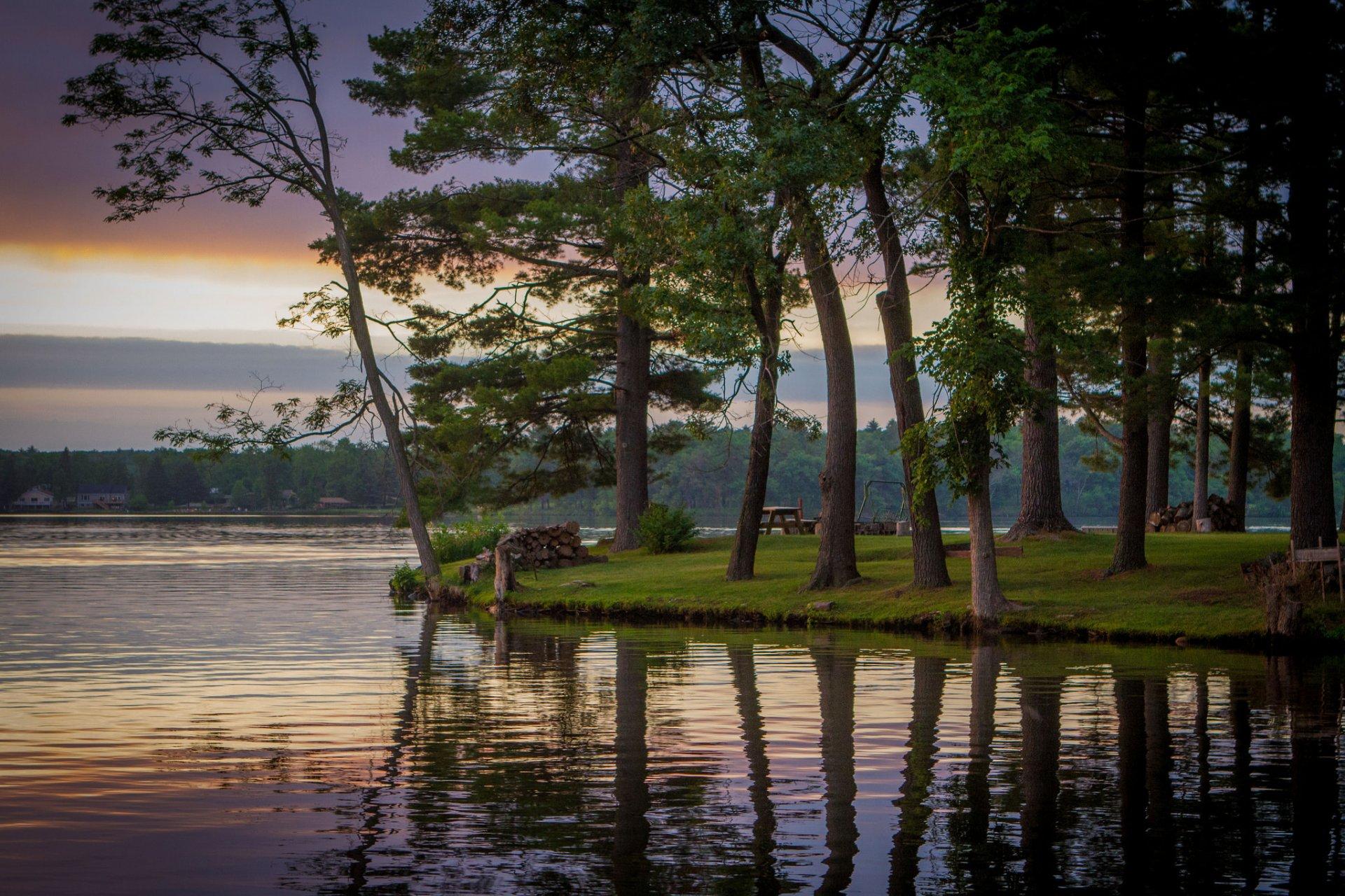 степаненко сосны на берегу озера картинки единственная мире технология