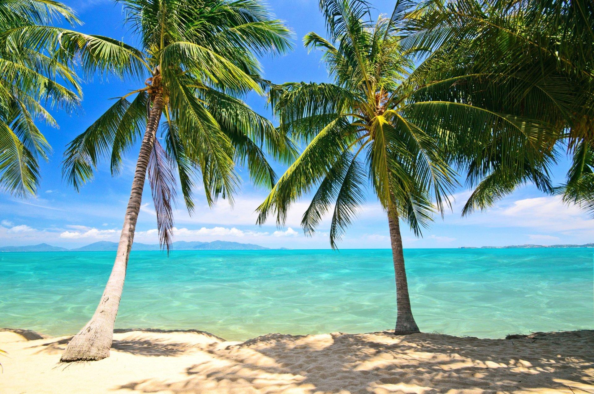 Картинки море пальмы и песок