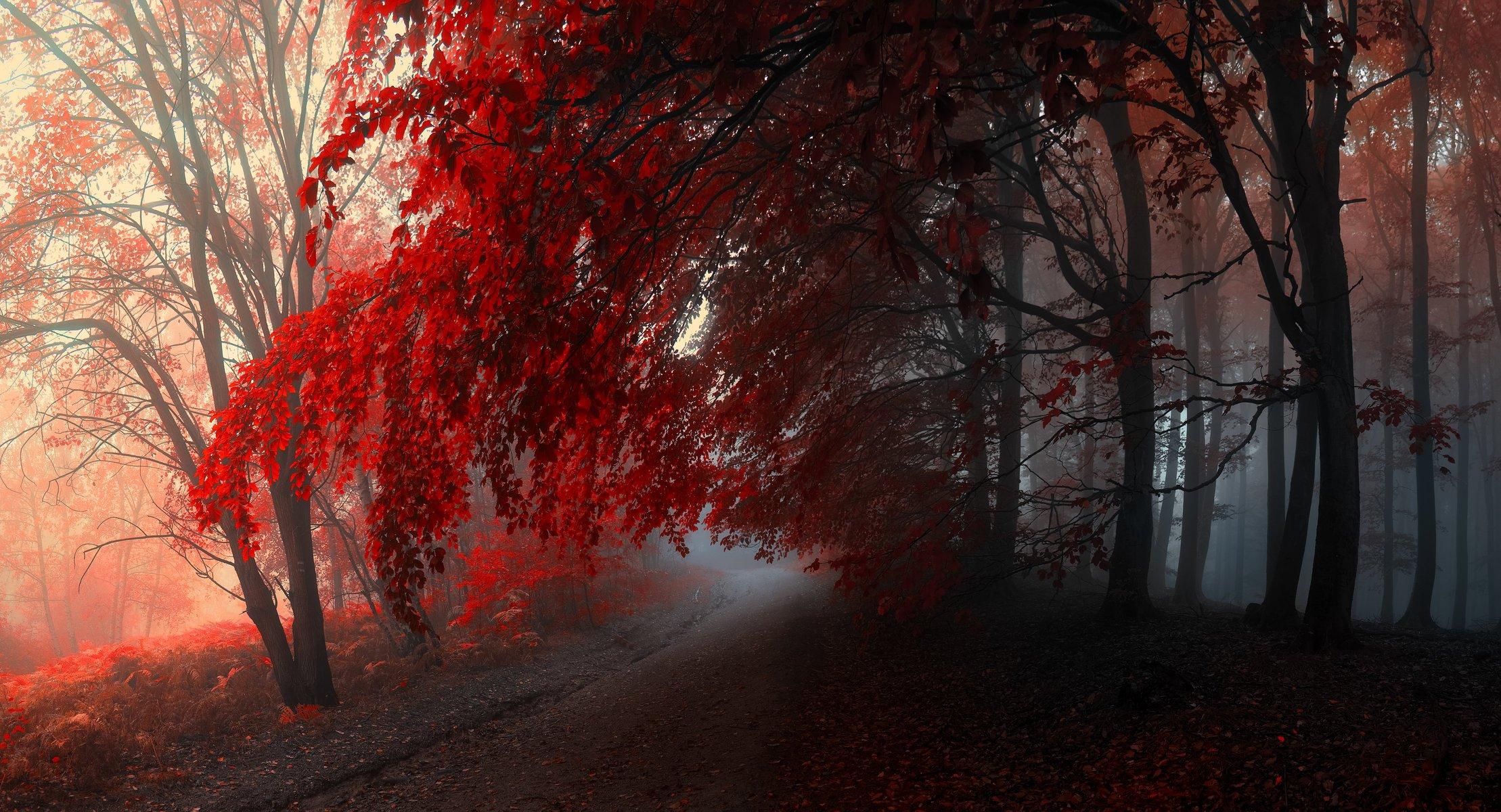 красный осенний лес  № 249361 без смс