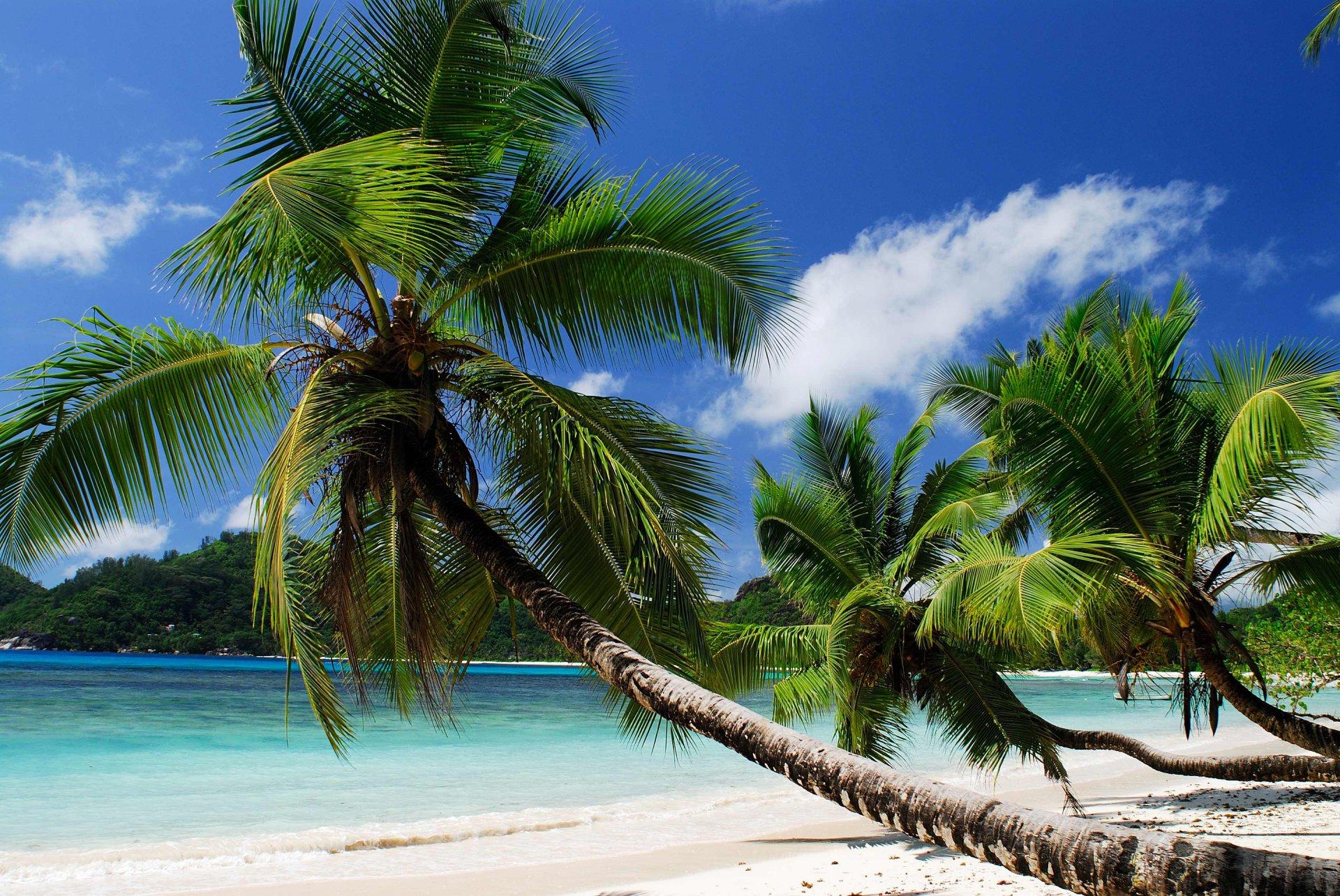 Картинка пальмы и ноутбука