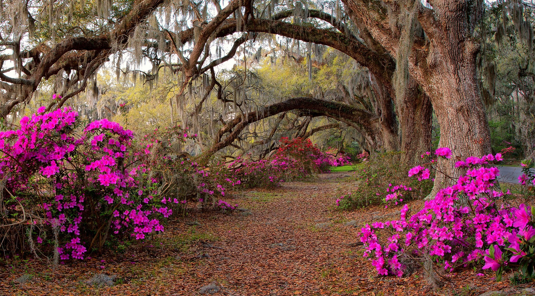 Цветов лес