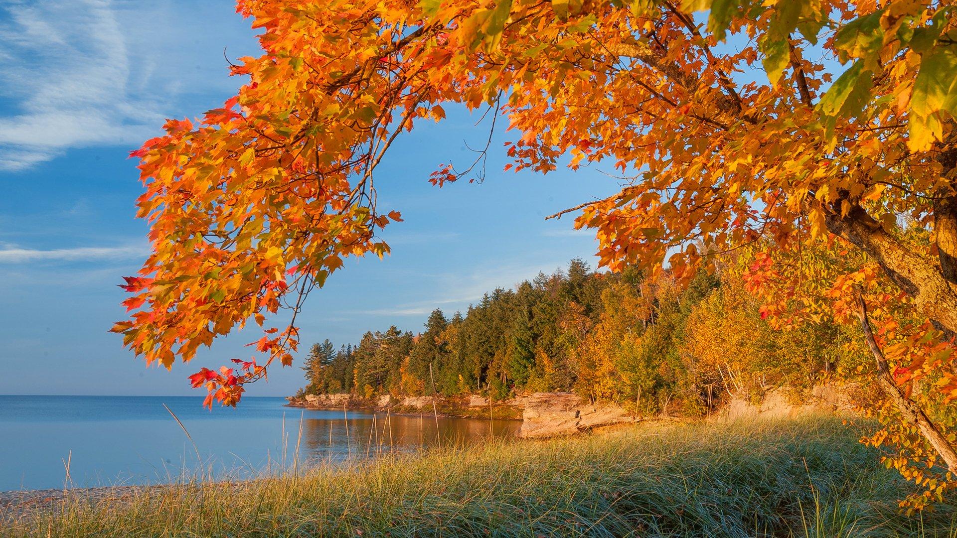 осень озеро деревья листья скачать