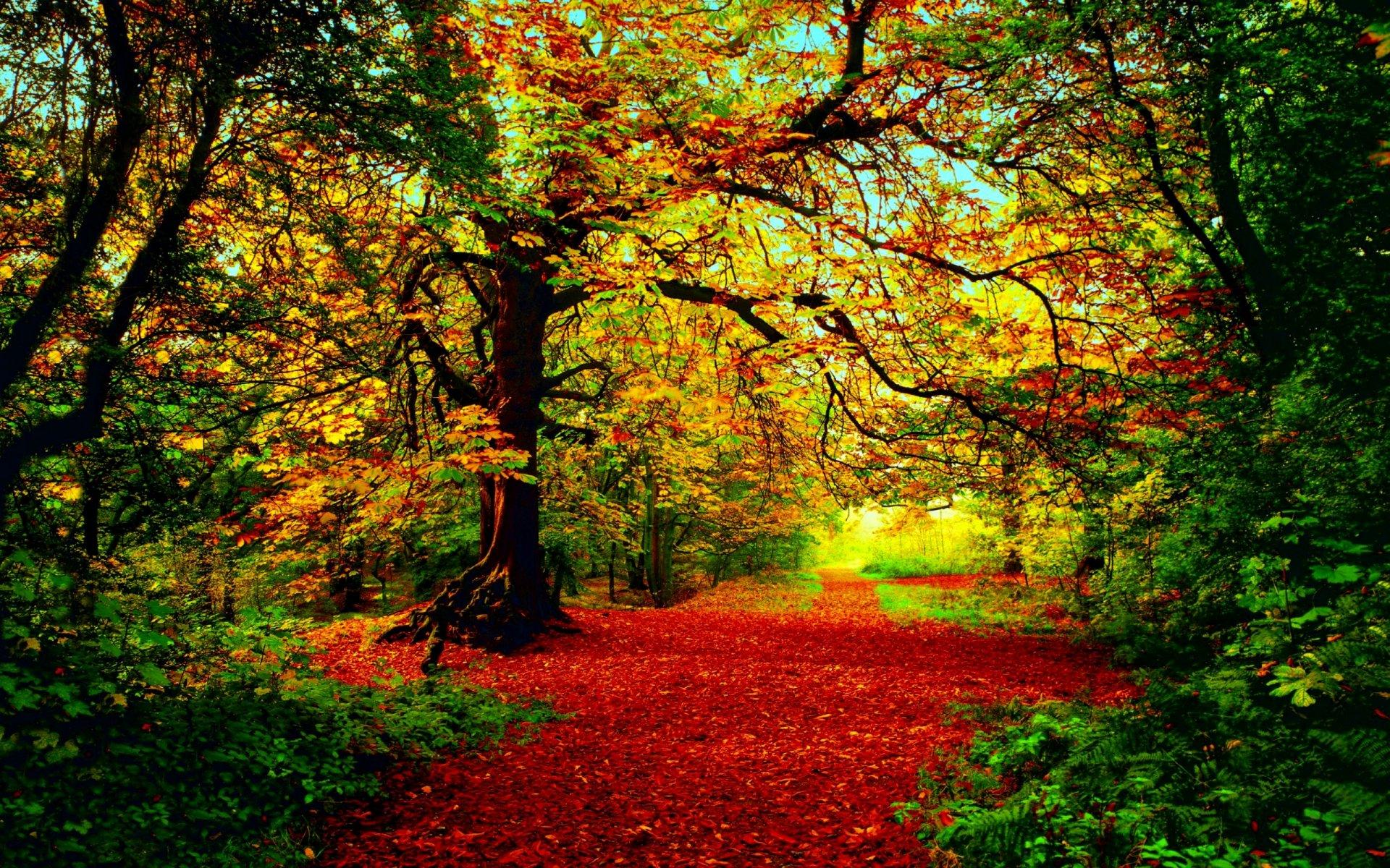 Картинки про осень фото
