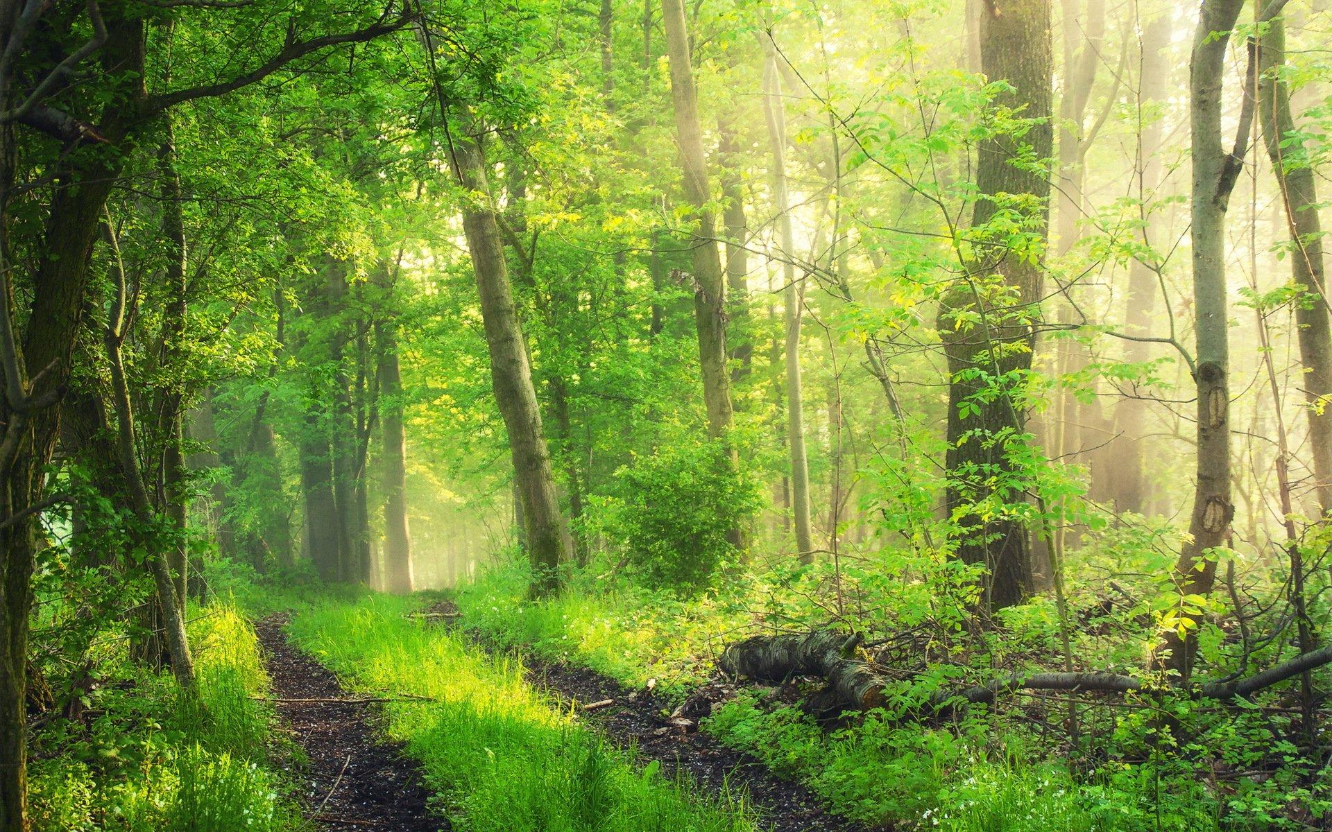 Лес картинка высокое качество