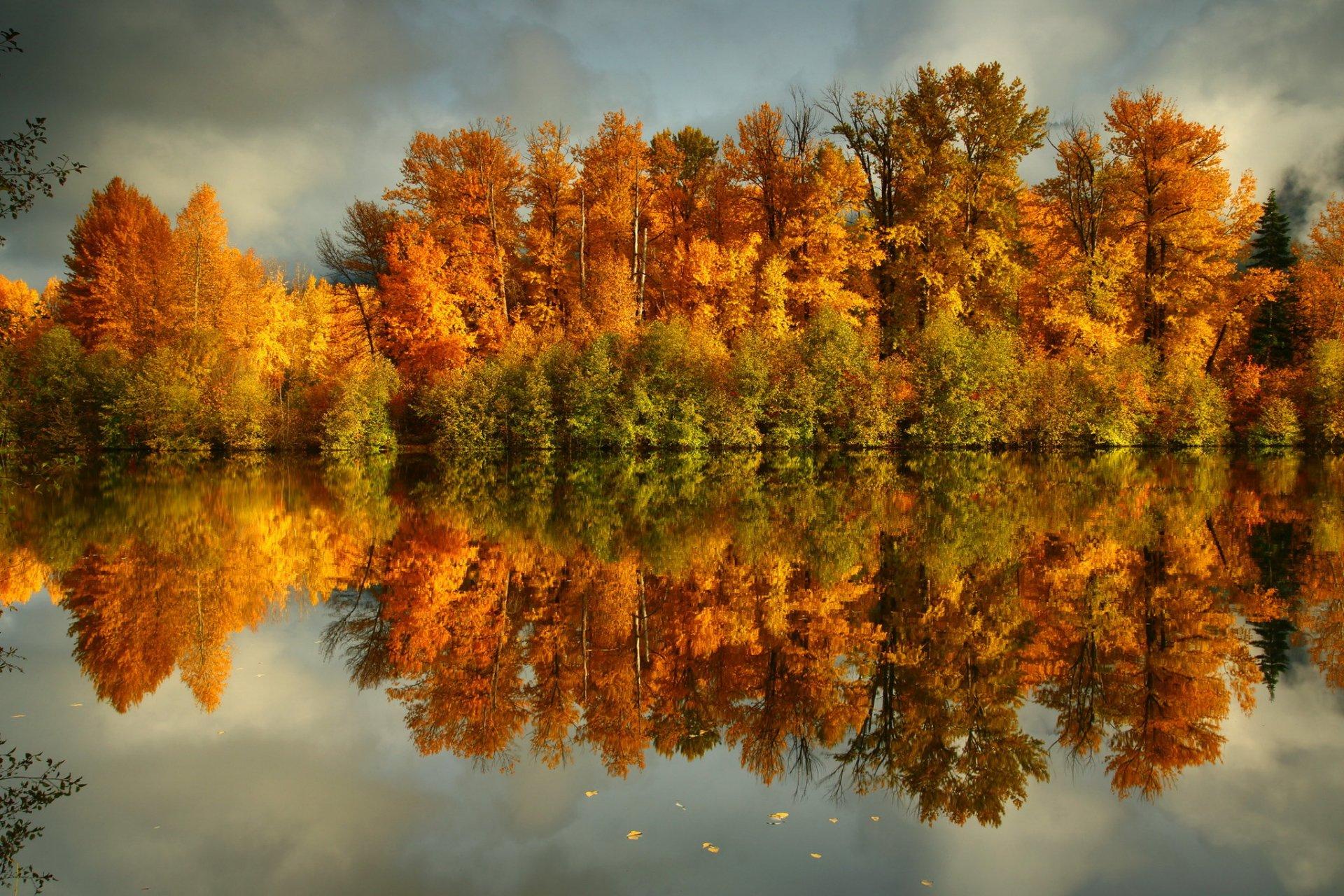 отделкой красота осеннего леса фото работники бродят