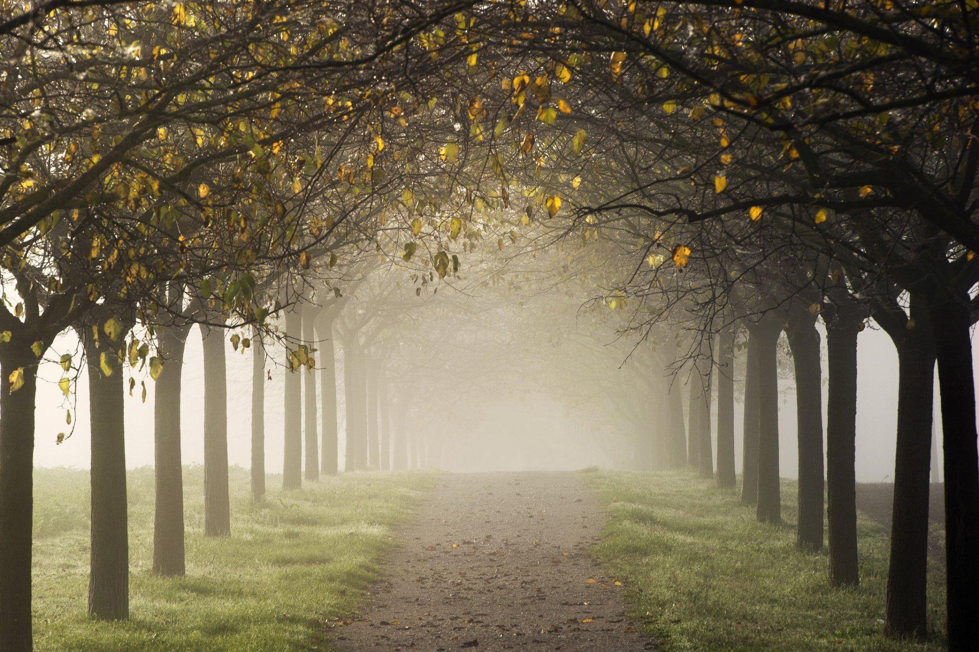 фотообои на стену аллея деревьев у дороги школьные годы мария