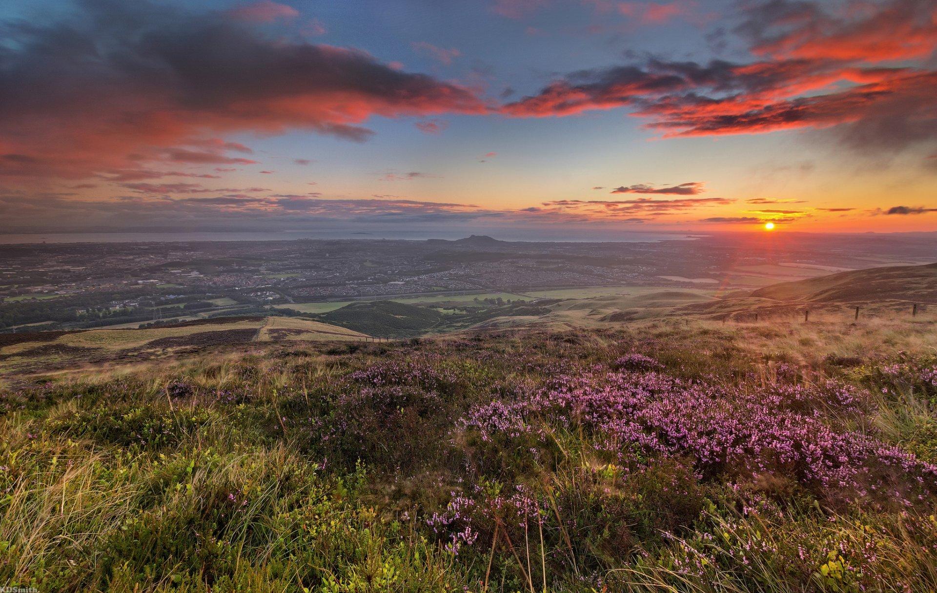 поле цветы рассвет field flowers dawn бесплатно