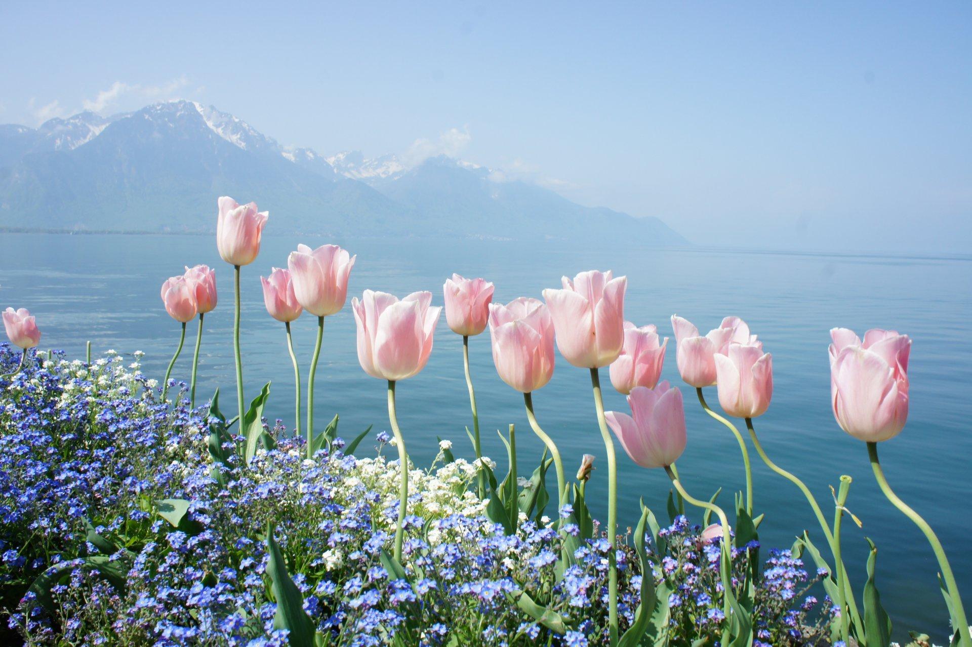 Красивые открытки с цветами и природой, открытки