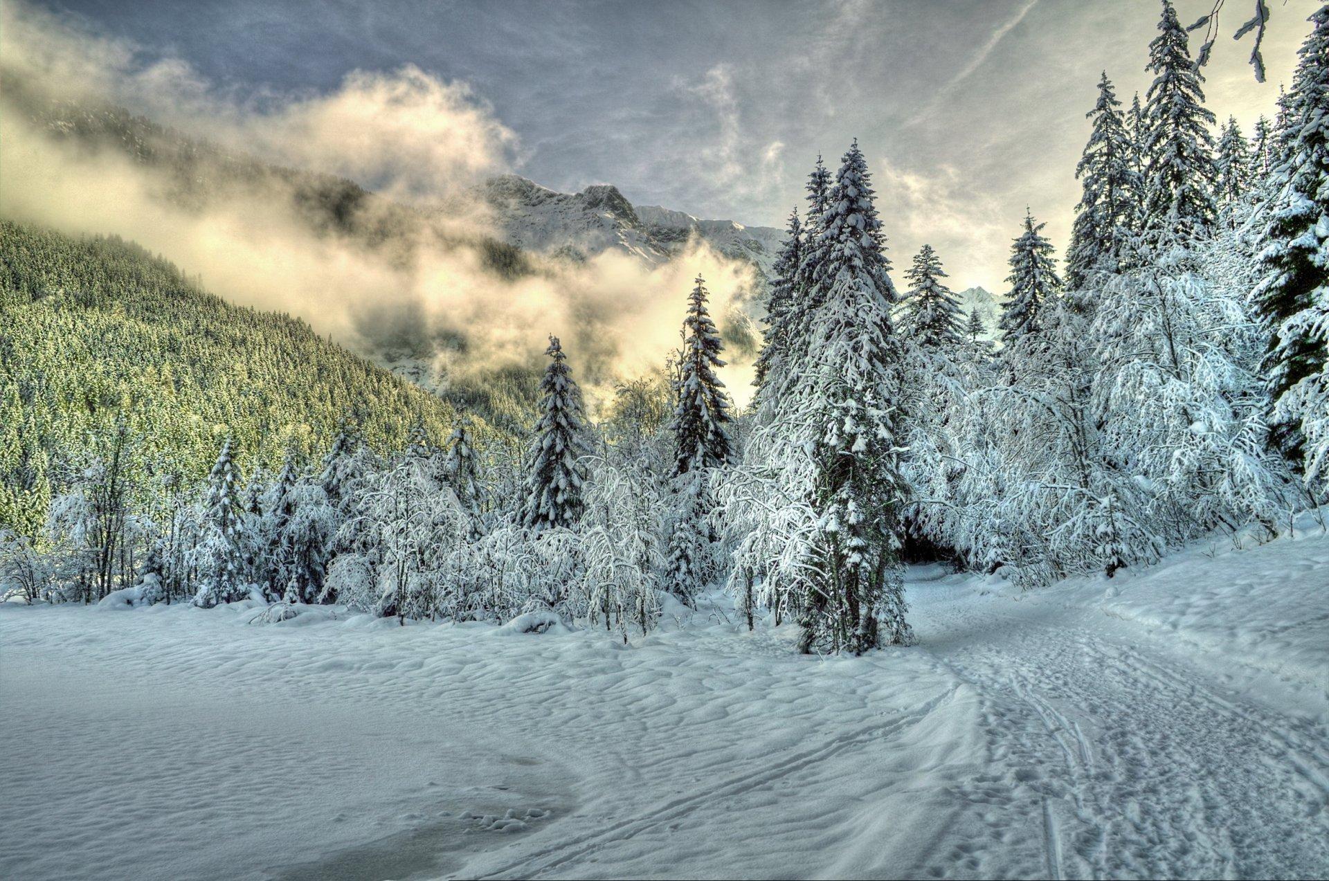 Фото зима лес природа