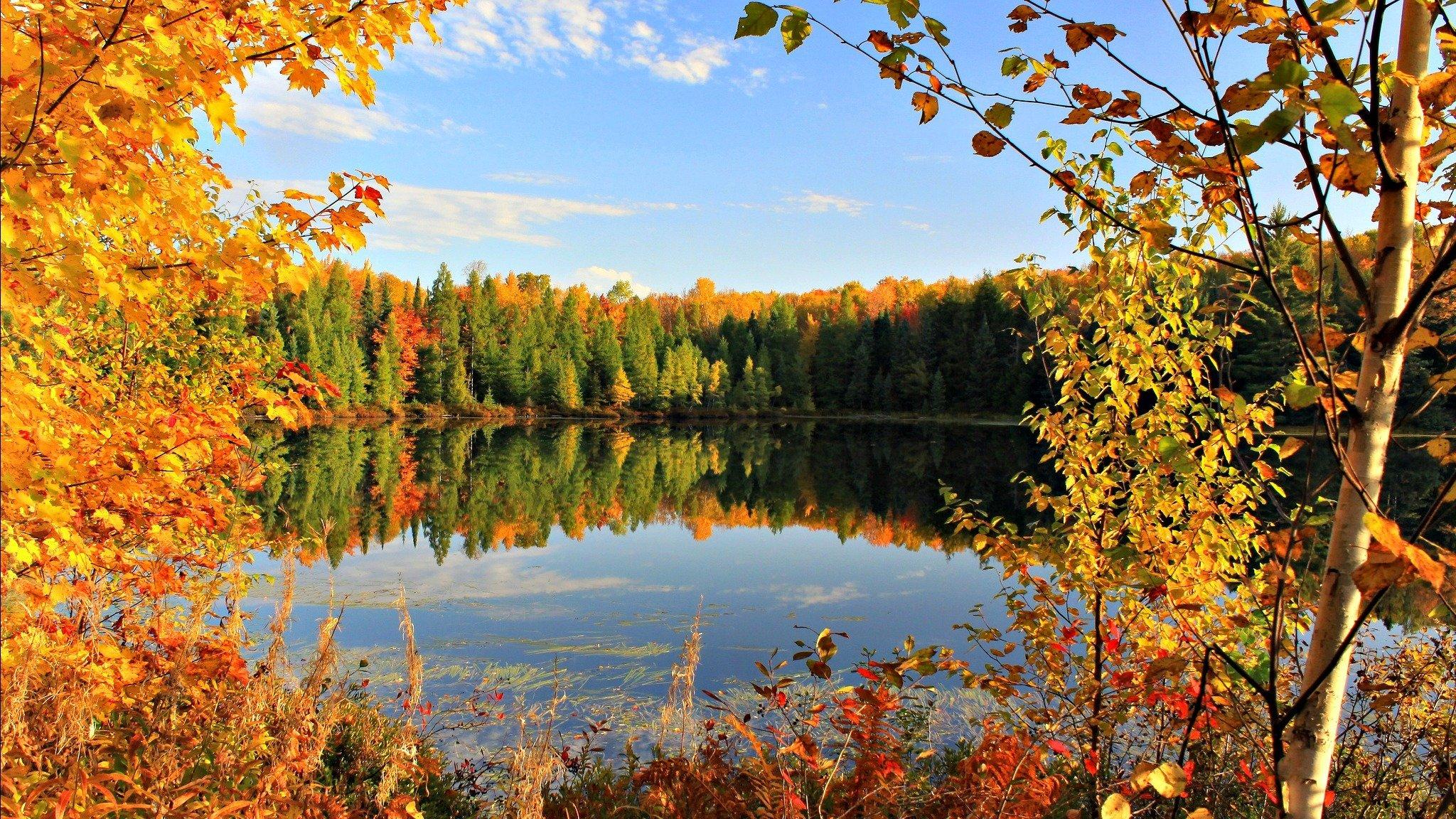Красивые картинки про золотую осень