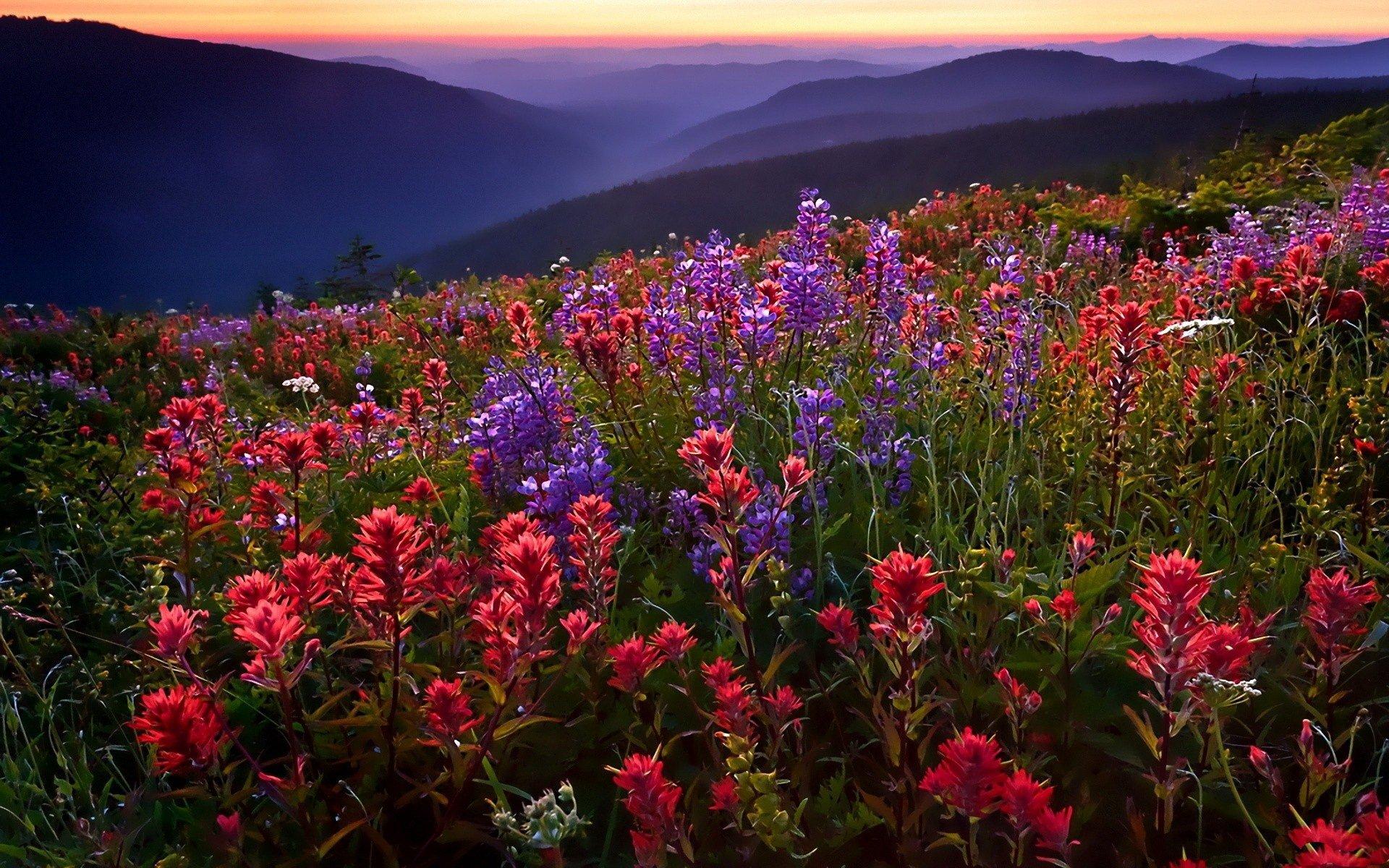 цветочная поляна закат загрузить