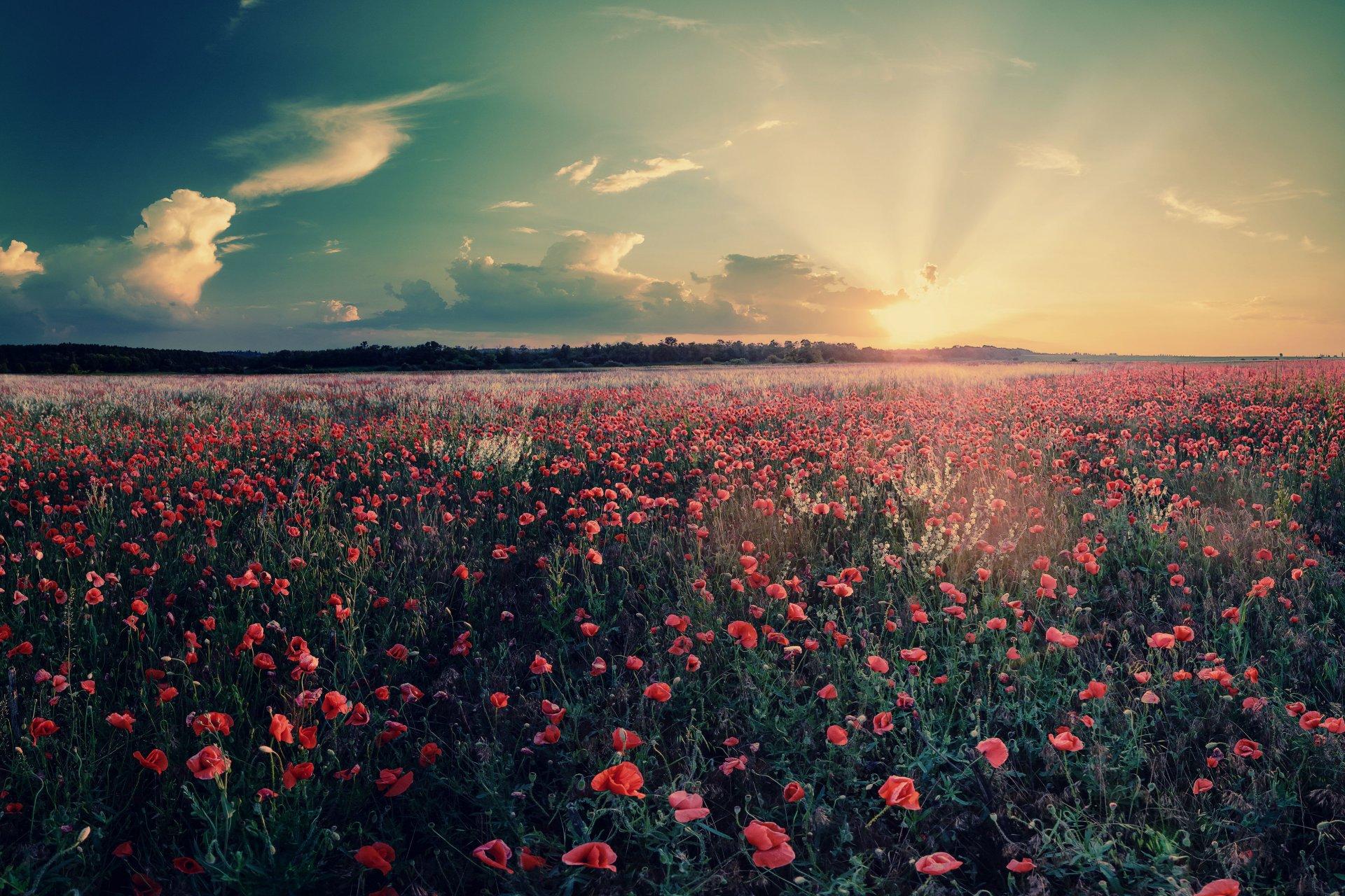 картинки про цветочные поля вопрос волнует многих