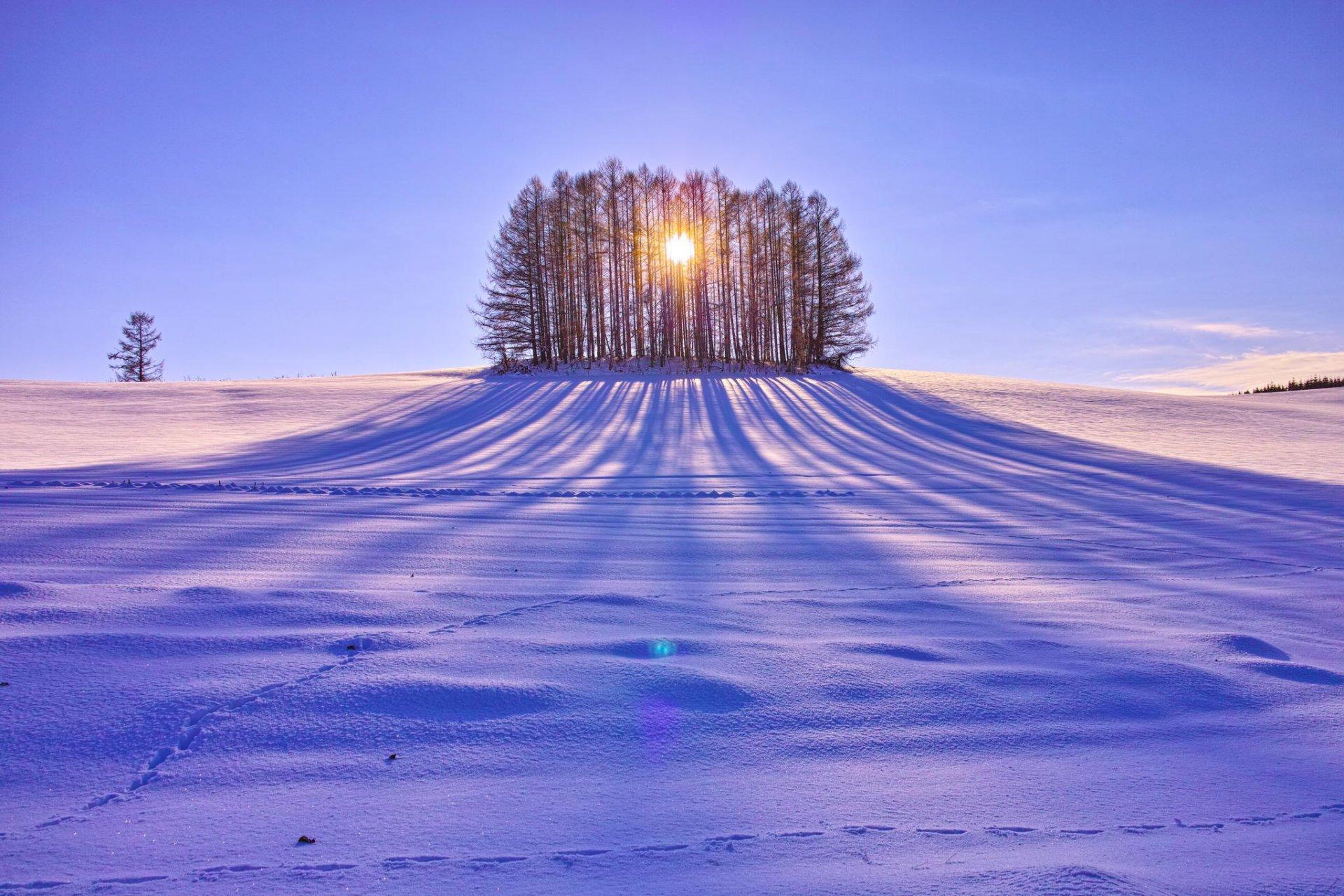 картинки поля в снегу нашей статье