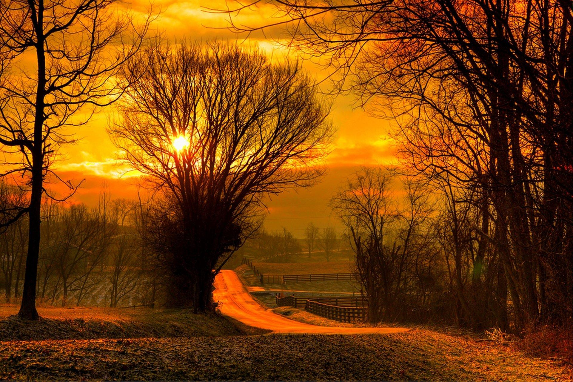 Восход солнца на окраине леса  № 1409548 без смс