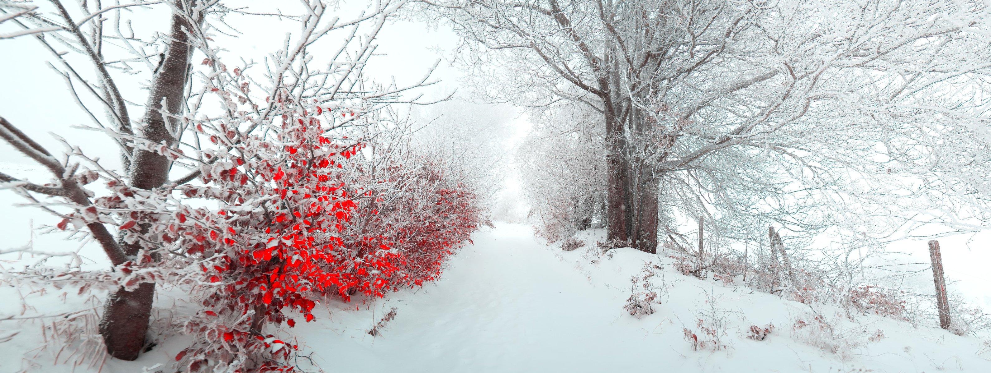 Обои елка, туман, утро. Природа foto 8