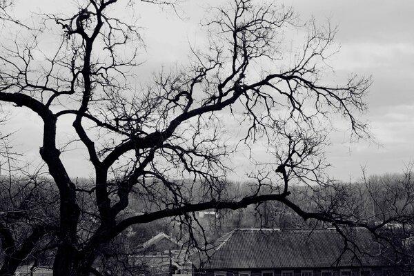 Картинки черно-белые 1366х768
