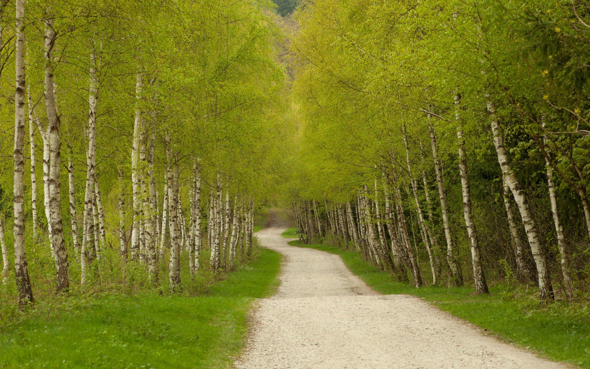 Дорога березы аллея загрузить