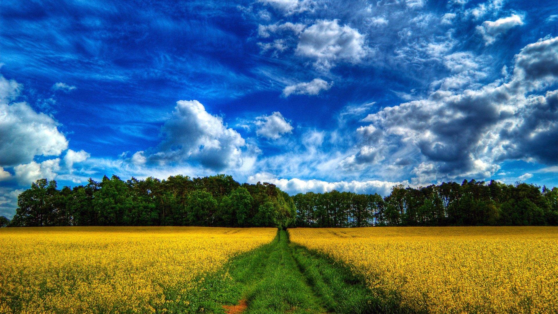 желто-зеленая дорога в степи  № 252737  скачать