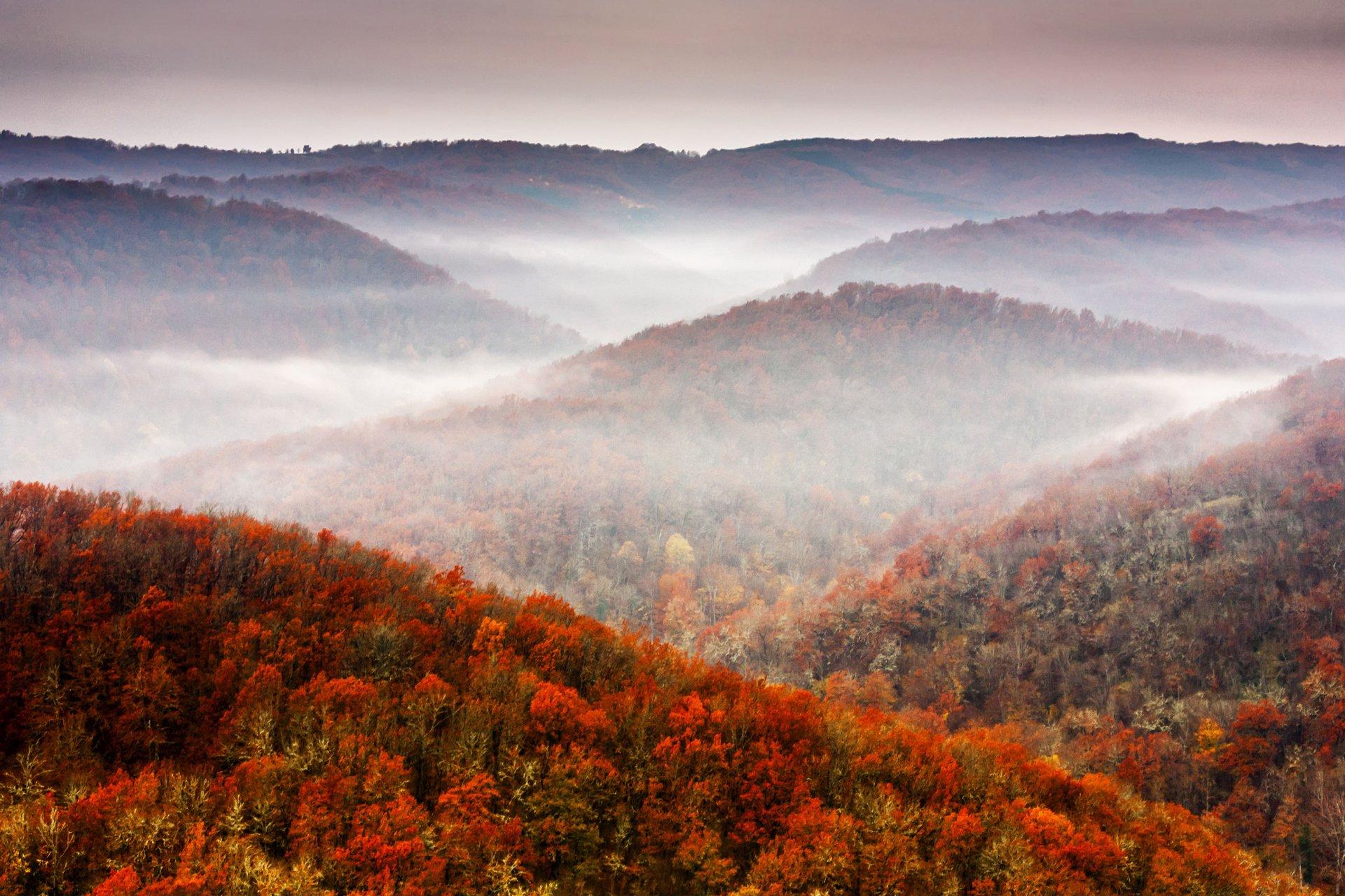 осень деревья гора скачать