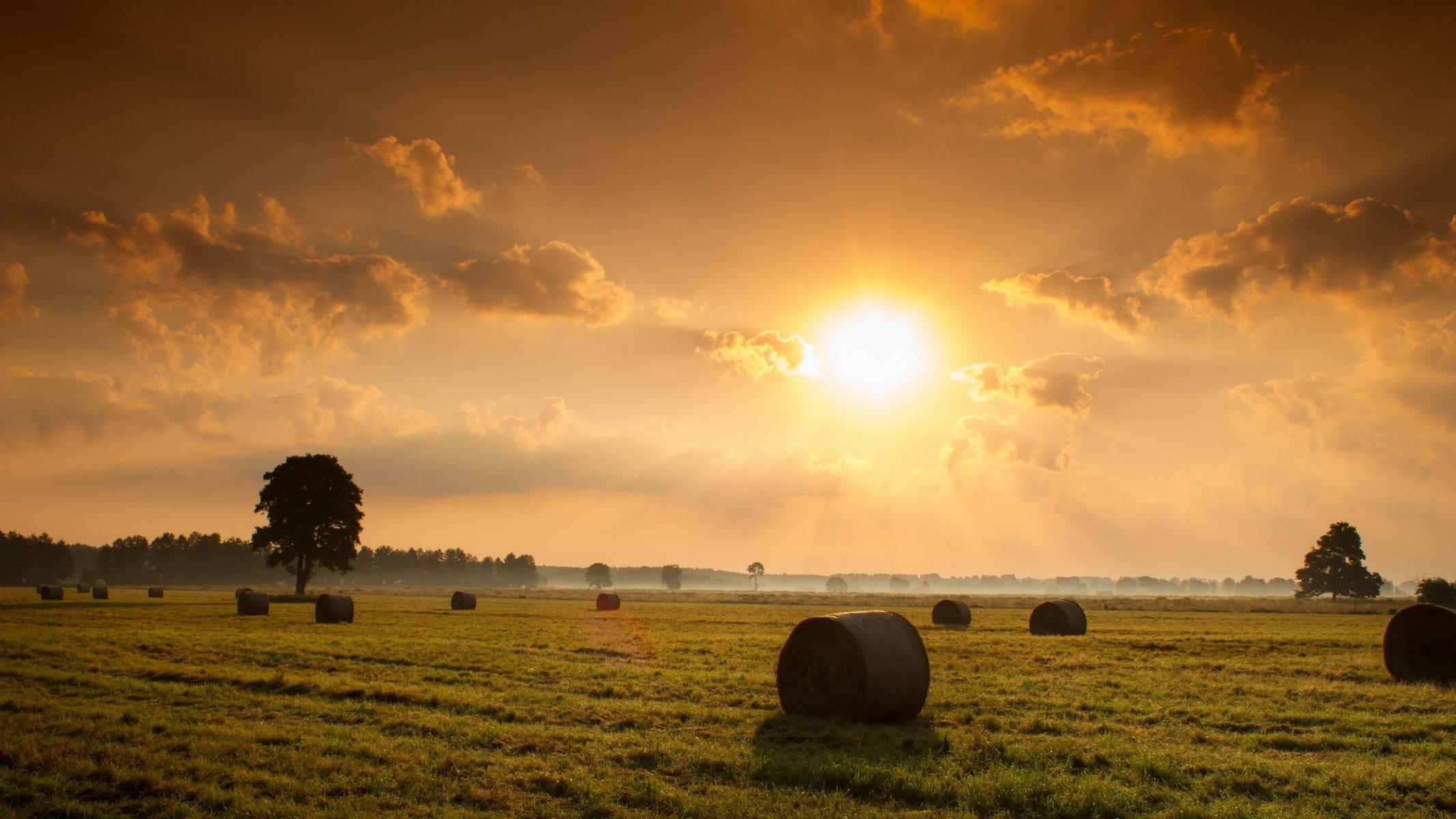 оранжевое авто дорога трава сено бесплатно