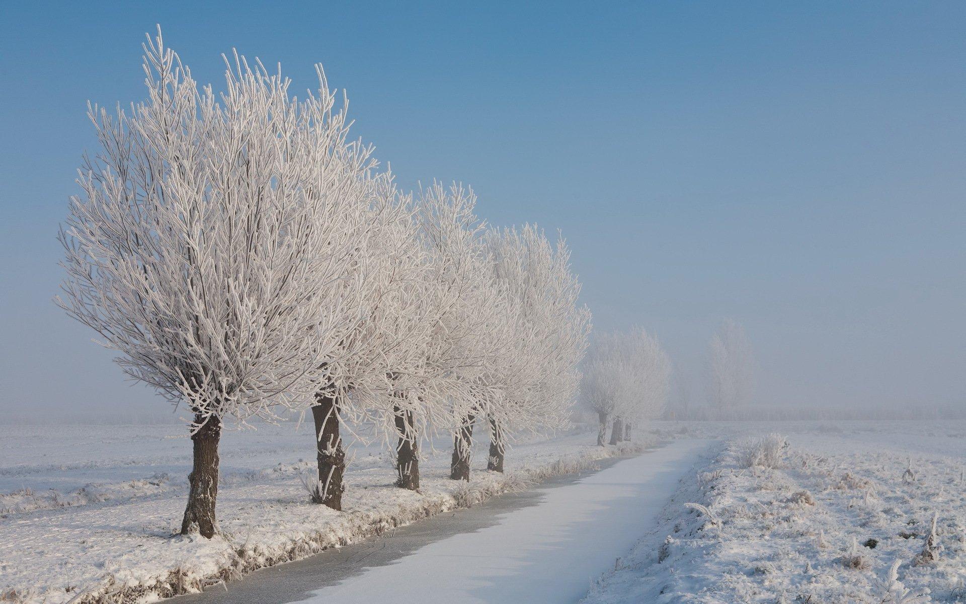 снег иней зима snow frost winter загрузить