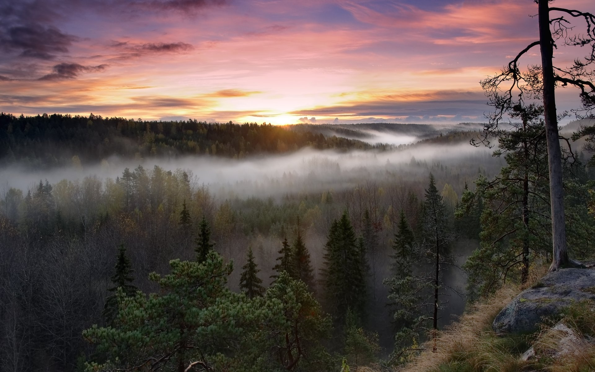 картинки северного леса тех