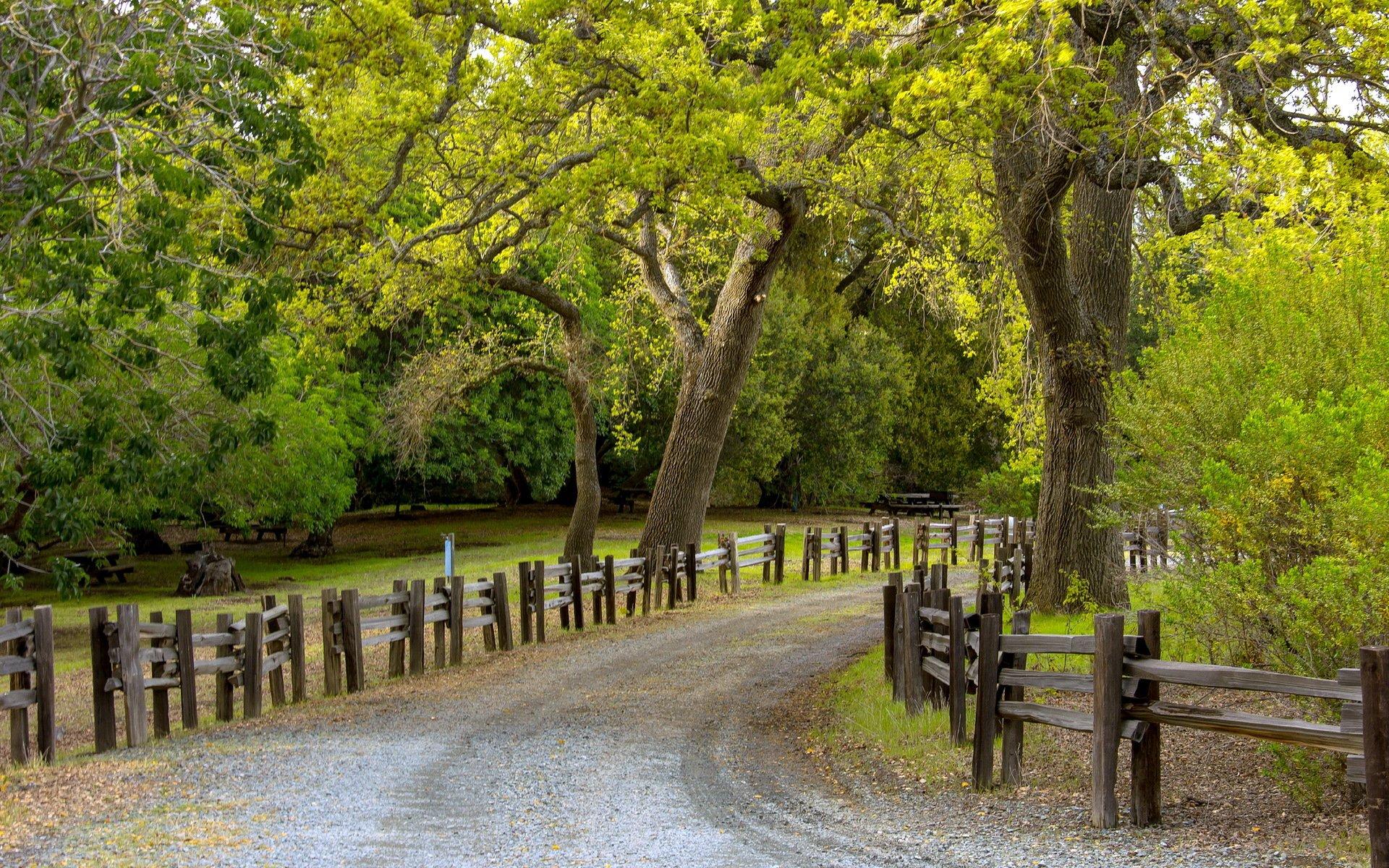 дерево дорога tree road  № 2404896  скачать