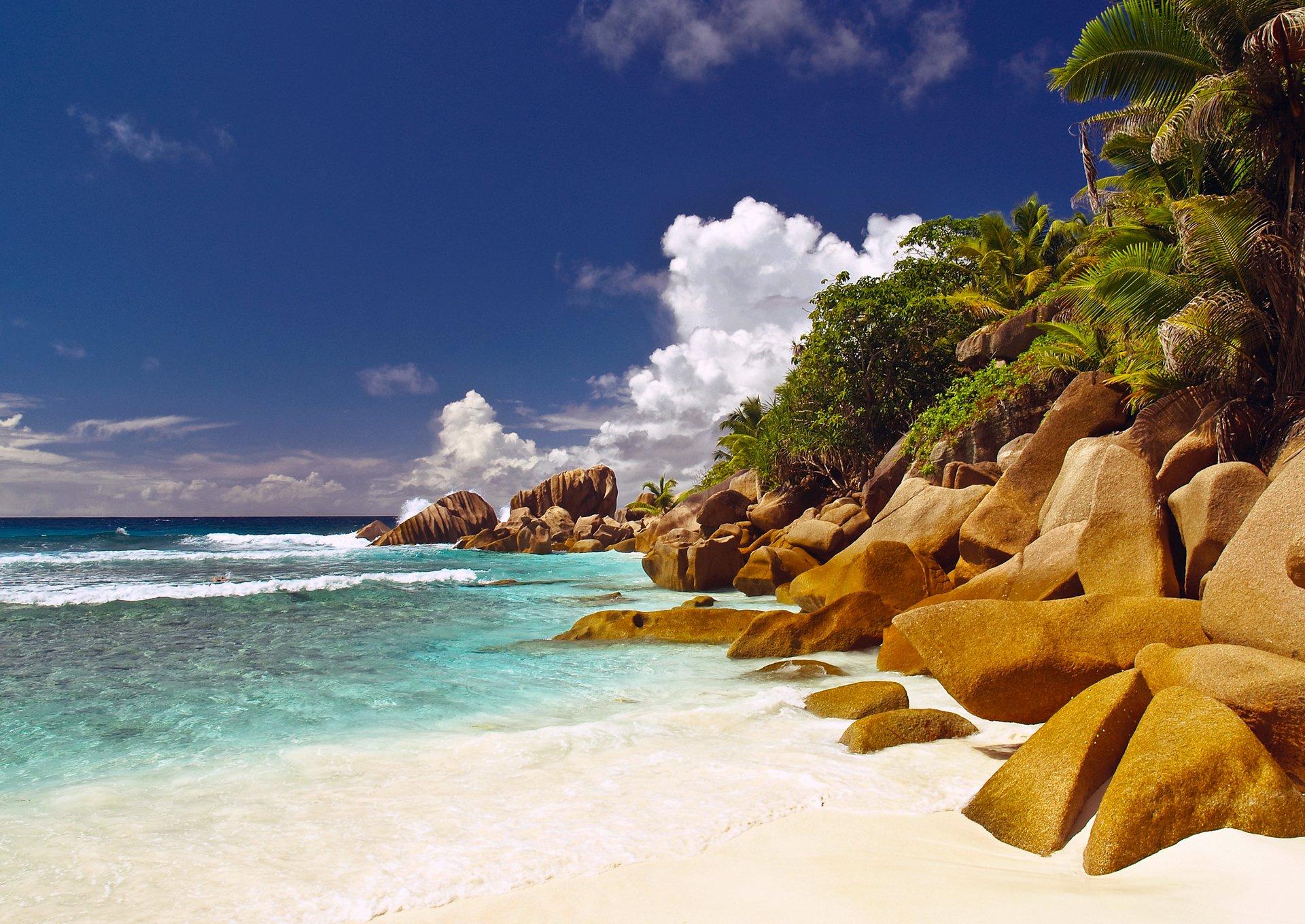 берег камни пальмы shore stones palm trees без смс