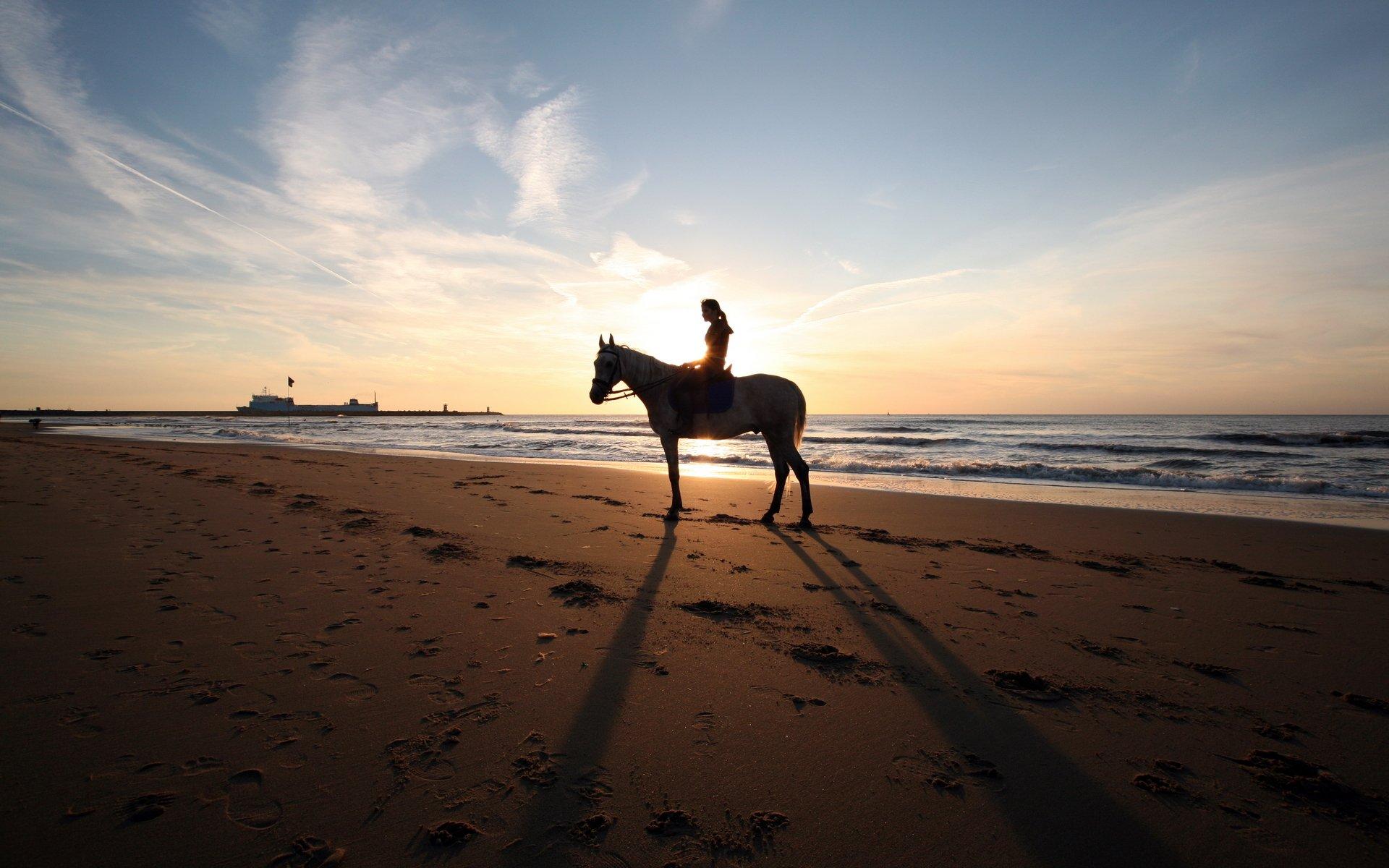 Лошади пара у моря загрузить