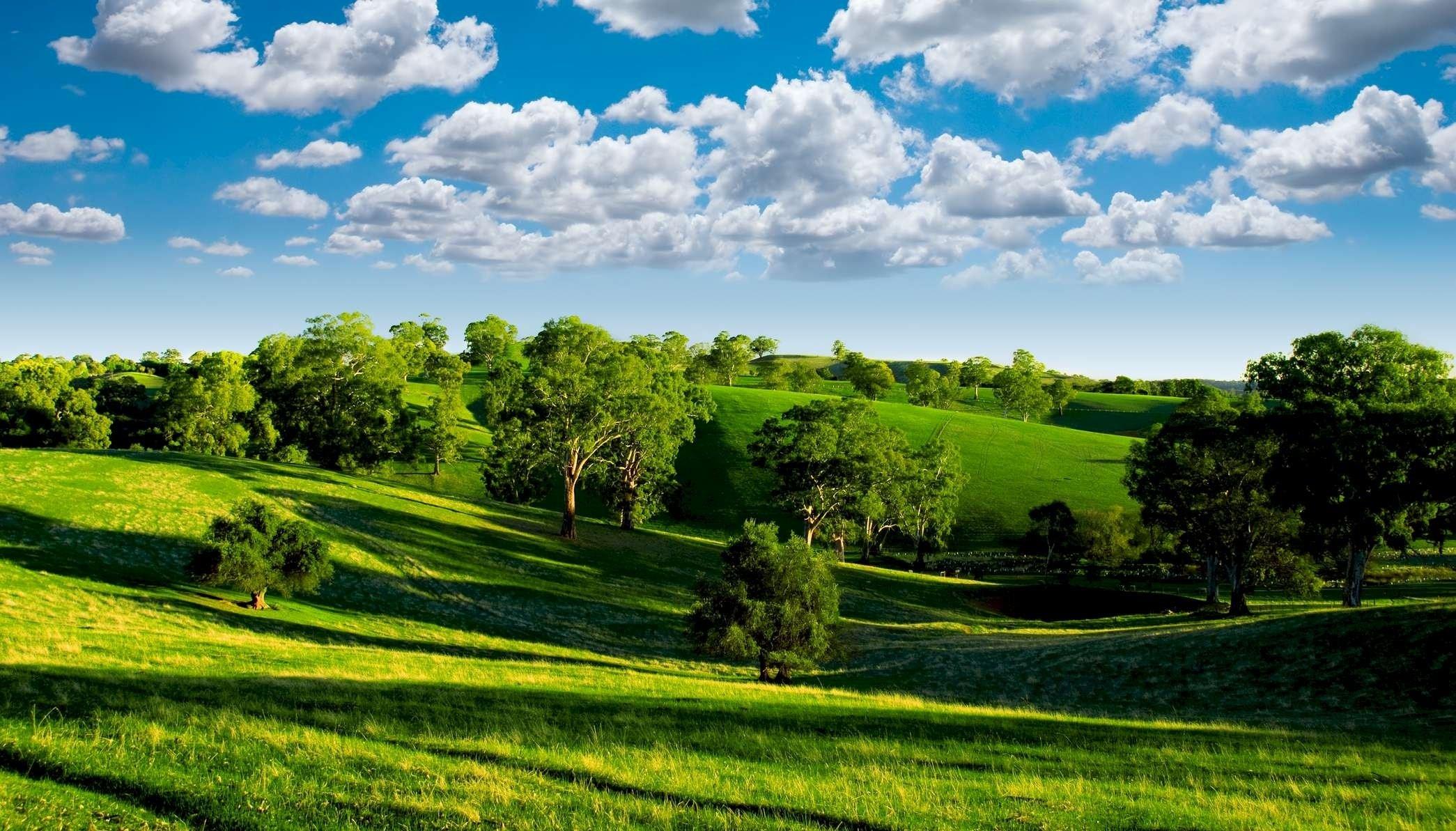 природа поле деревья облака горизонт nature field trees clouds horizon бесплатно