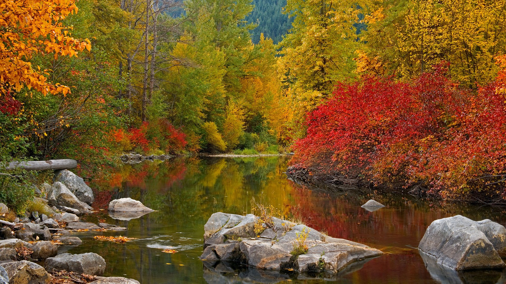сделать красота осеннего леса фото честь