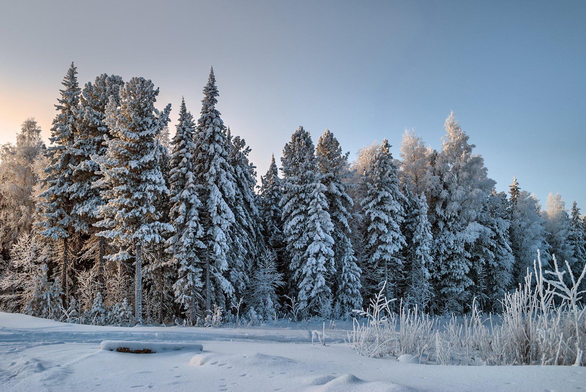 фото природа зимнего леса