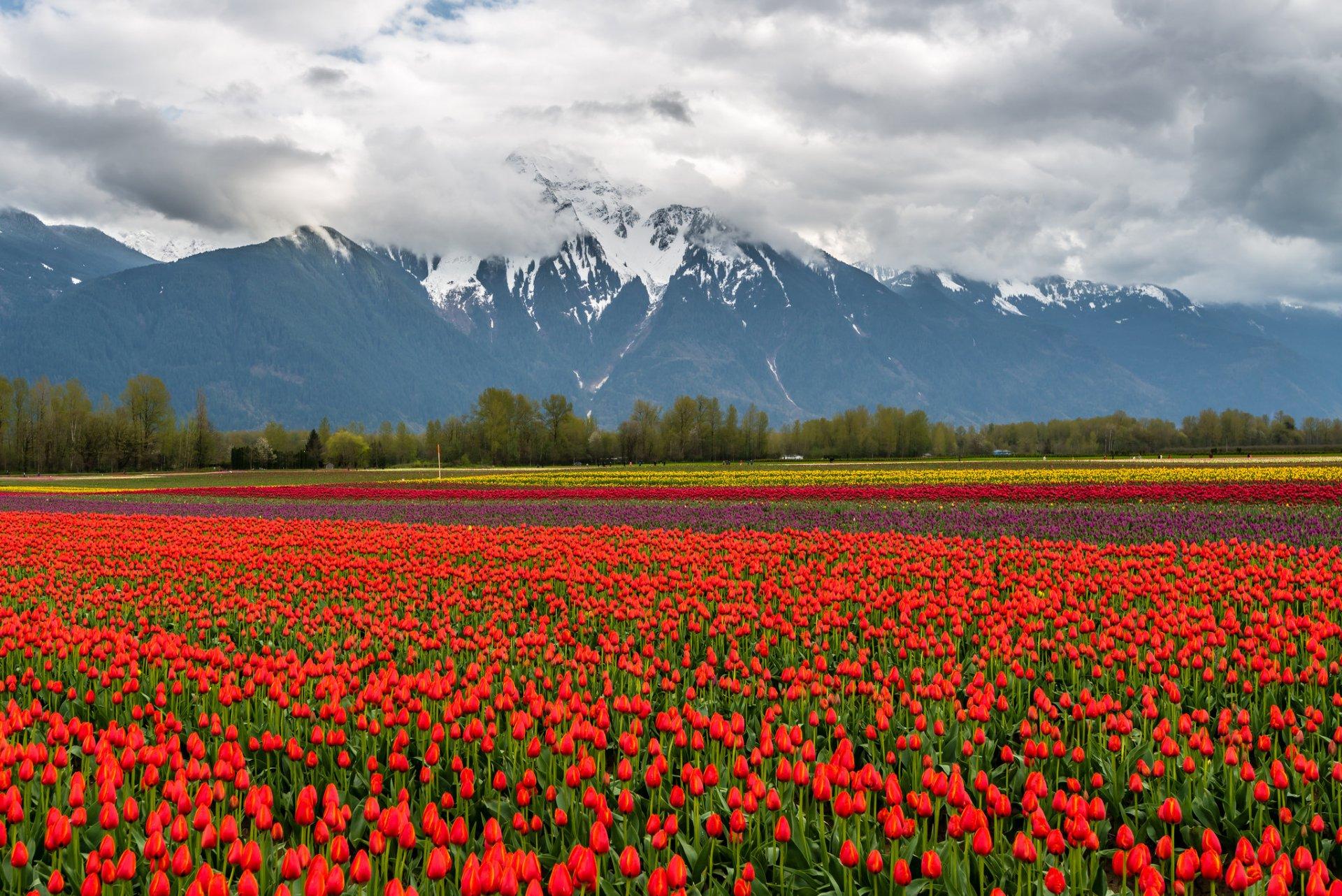 для красивые горные пейзажи весна с тюльпанами фото ответы ваши