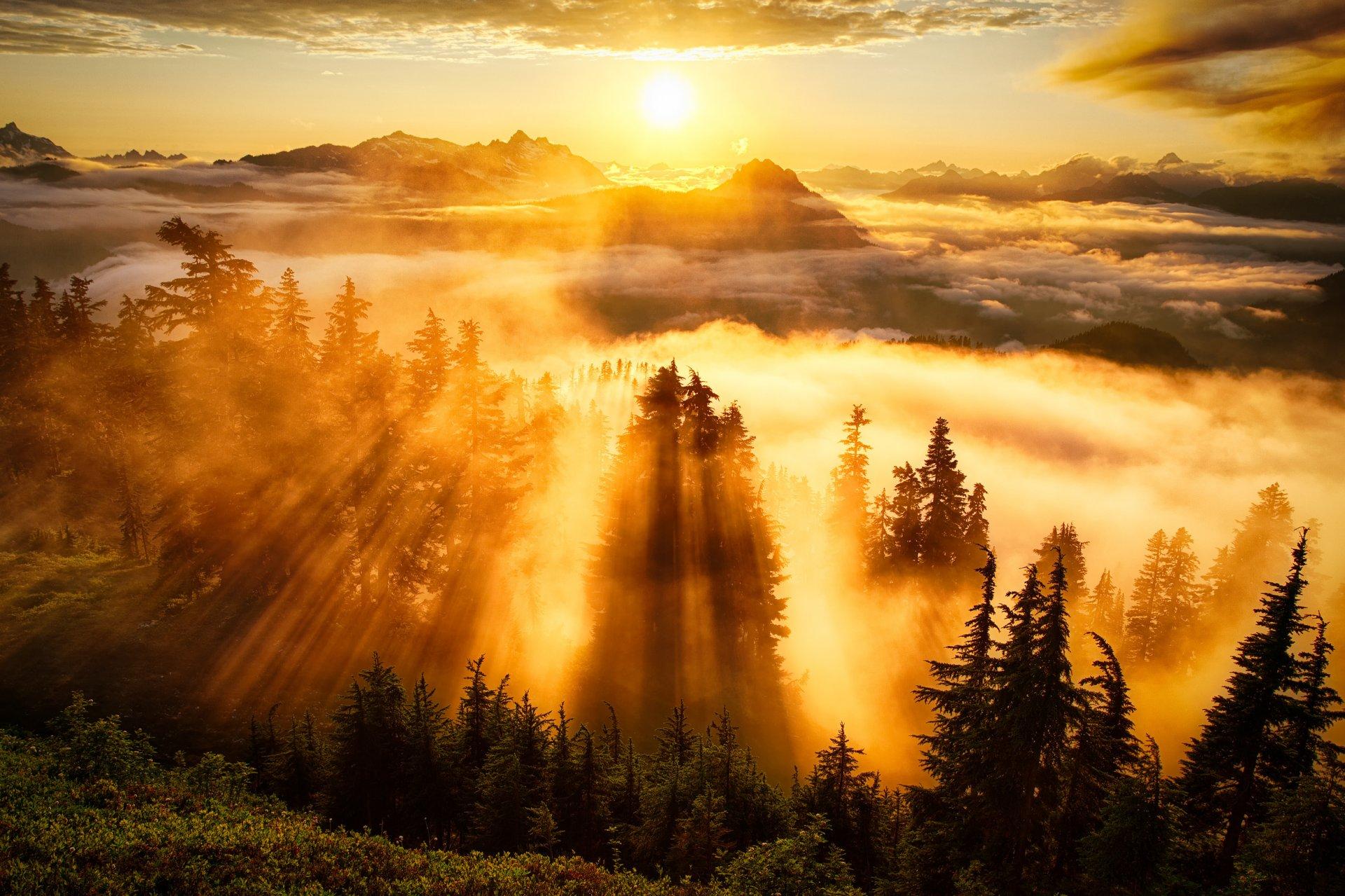 Картинки о природе с добрым утром, гифки живые мультяшки