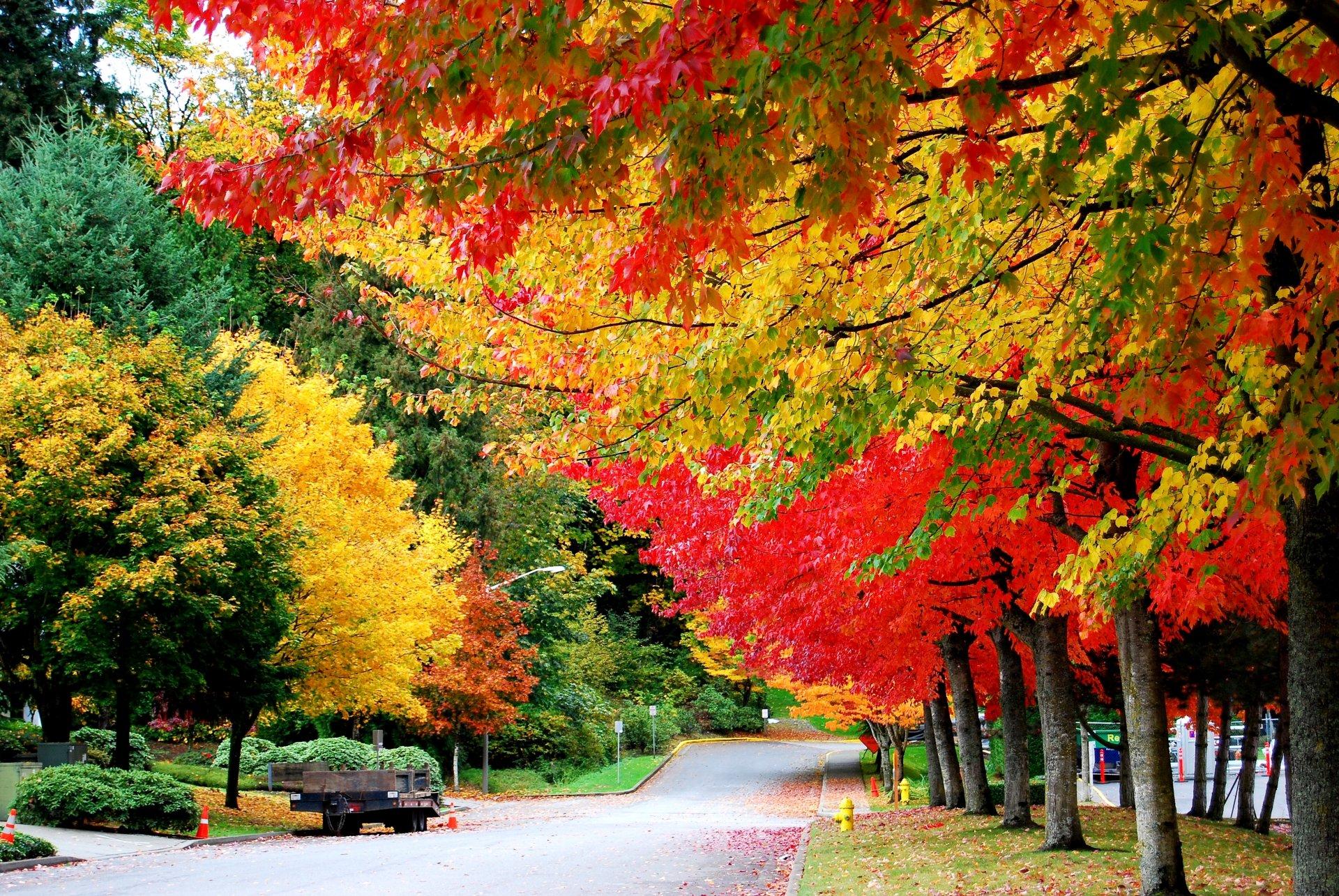 Картинки с изображением осени в сентябре, четверг приколы