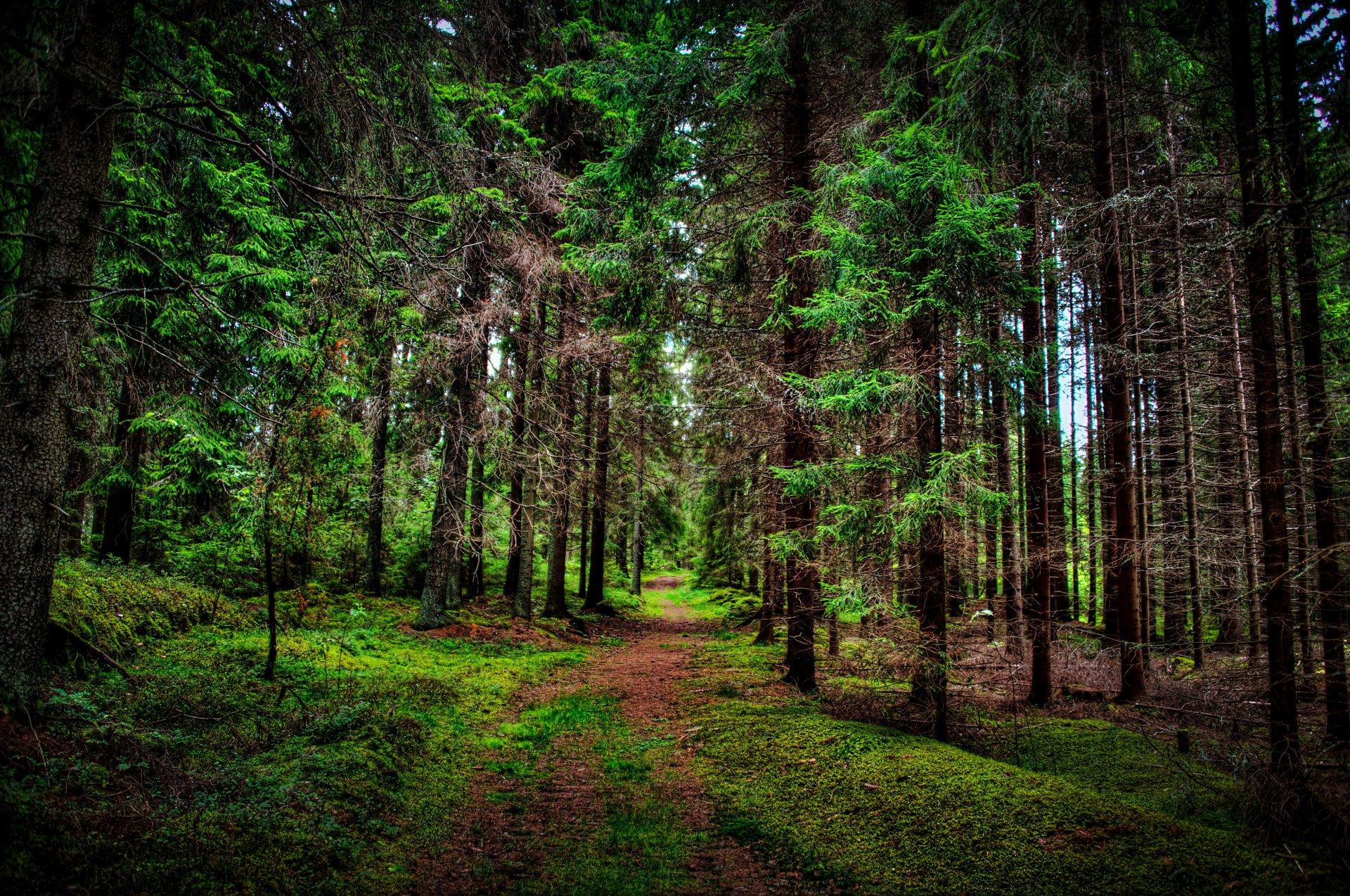 светом фотографии леса для печати дороге