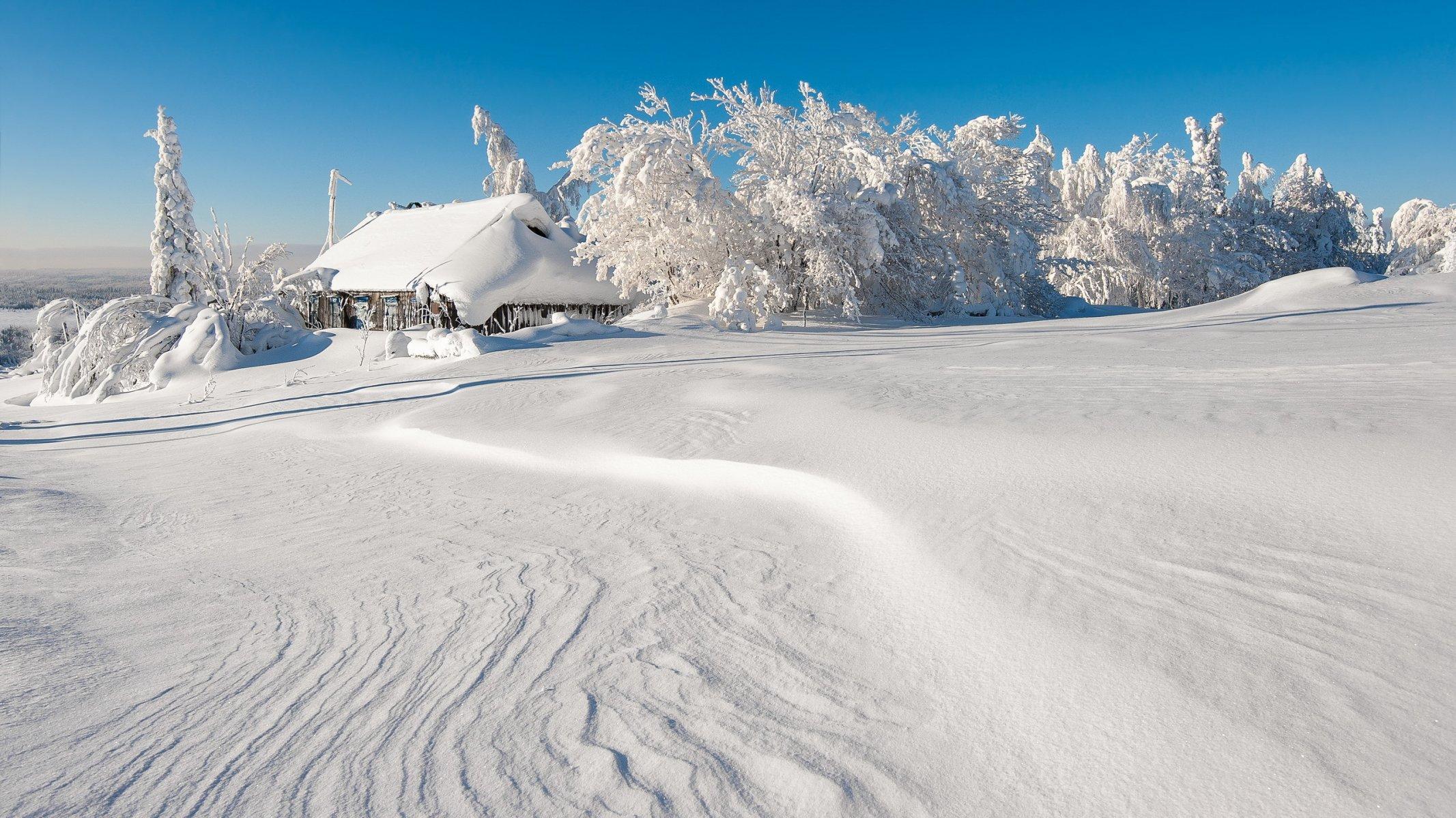 успела снежные пейзажи фото животными расцветками